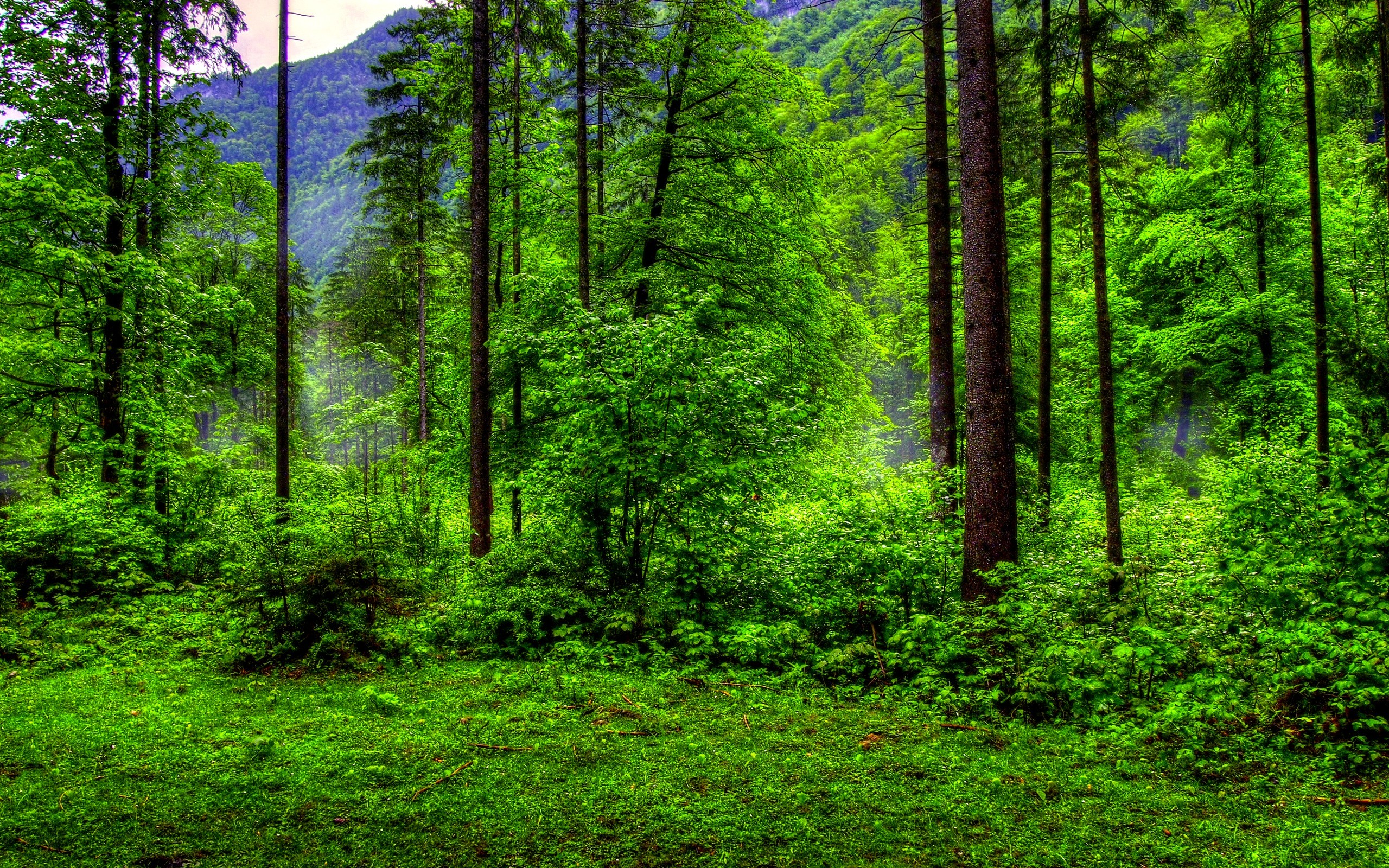 Green Forest Wallpaper (71+ Images