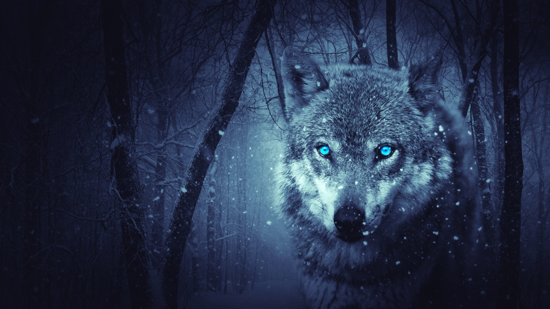 1920x1080  Wallpaper wolf, predator, photoshop, art