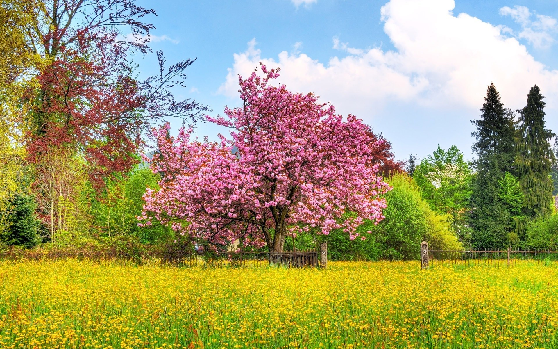 Spring Scenes Wallpaper 42 Images