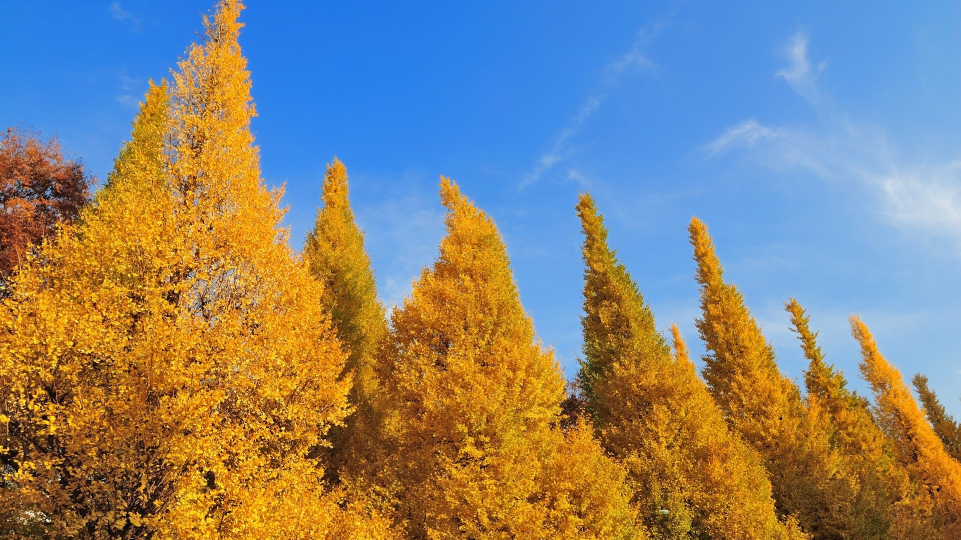 1920x1080 ... Background Full HD 1080p.  Wallpaper trees, autumn, sky, leaves