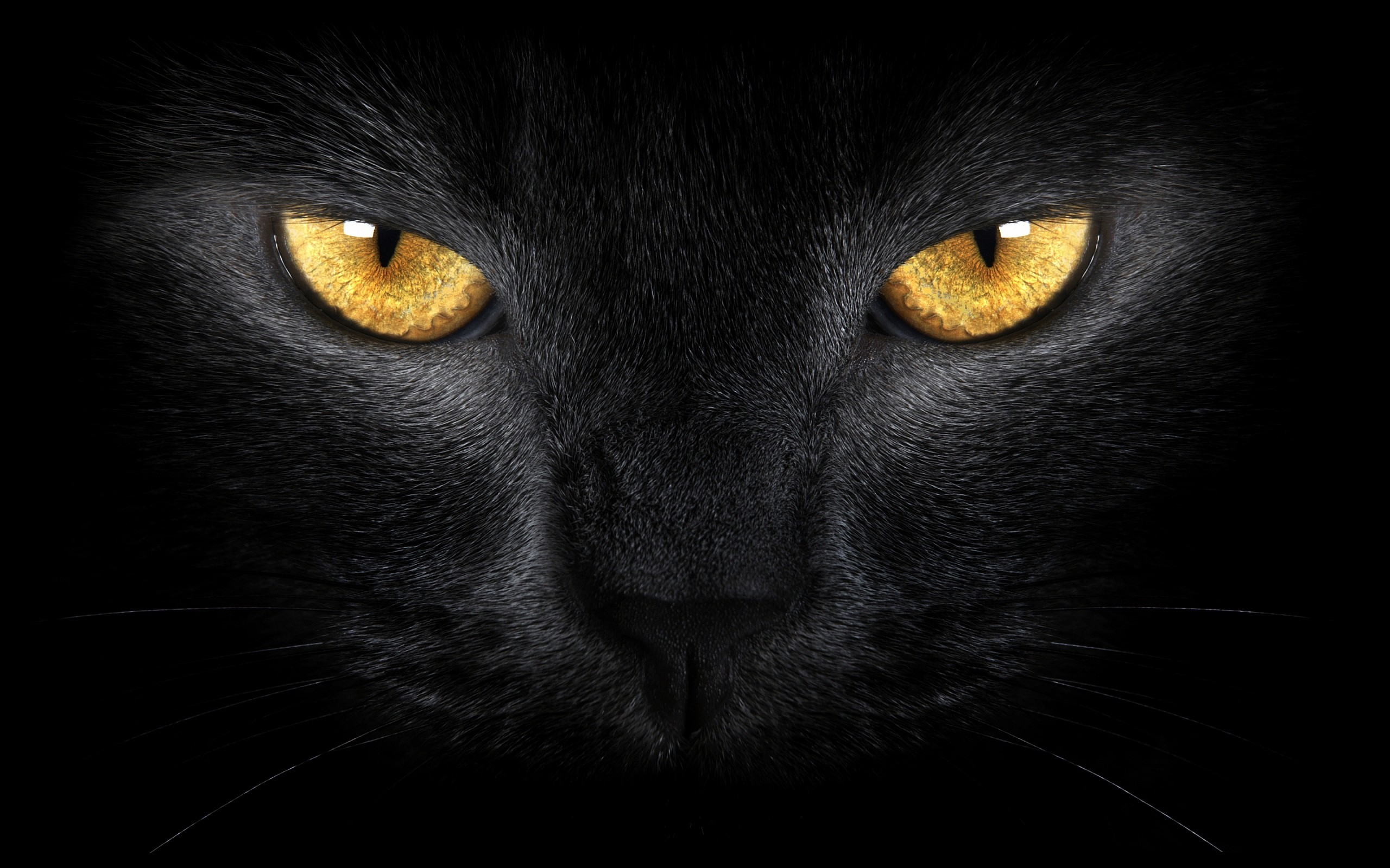A Black Cat With Yellow And Ble Eyes