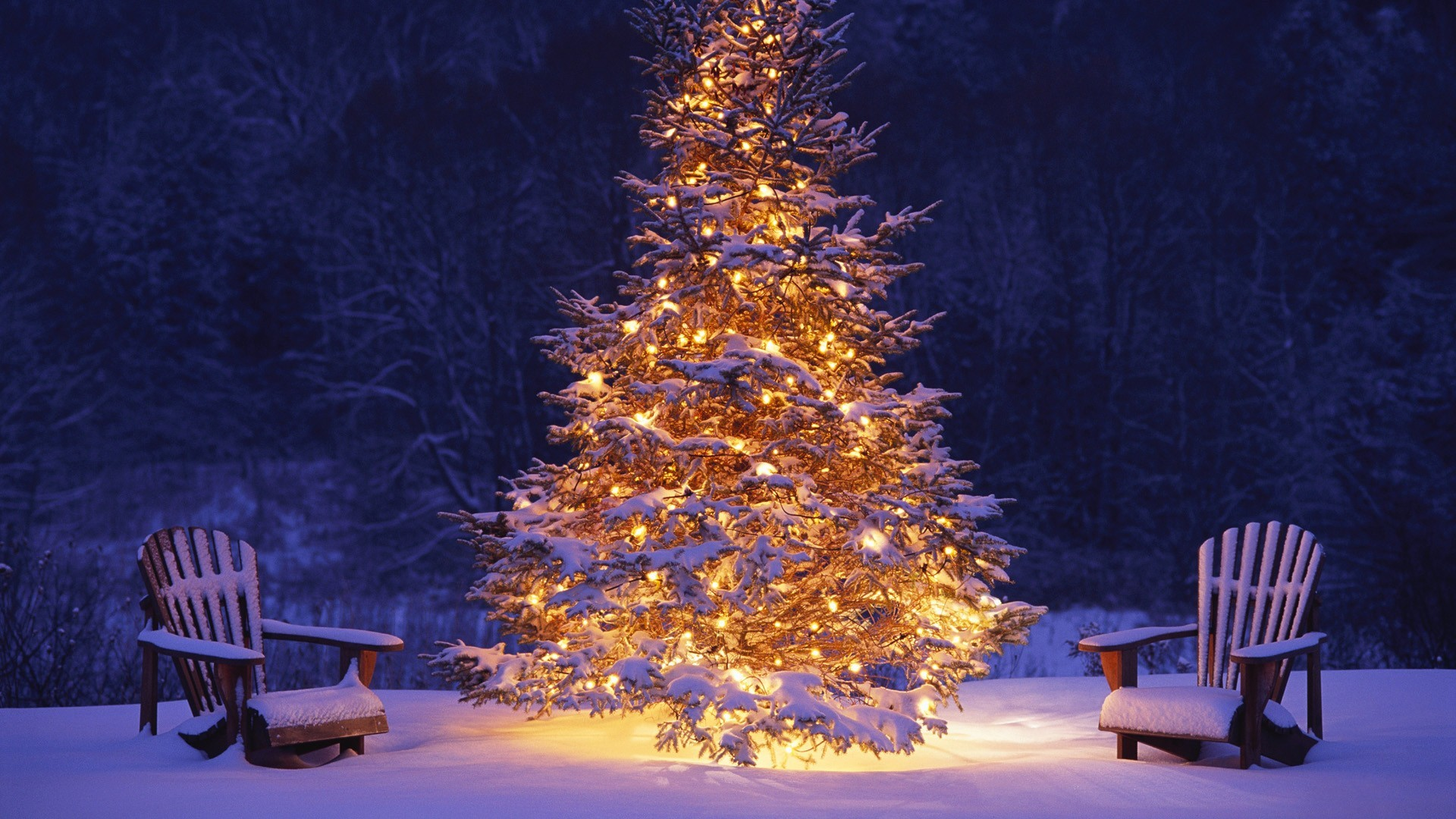 1920x1080 Beautiful Christmas Tree in Winter HD Picture