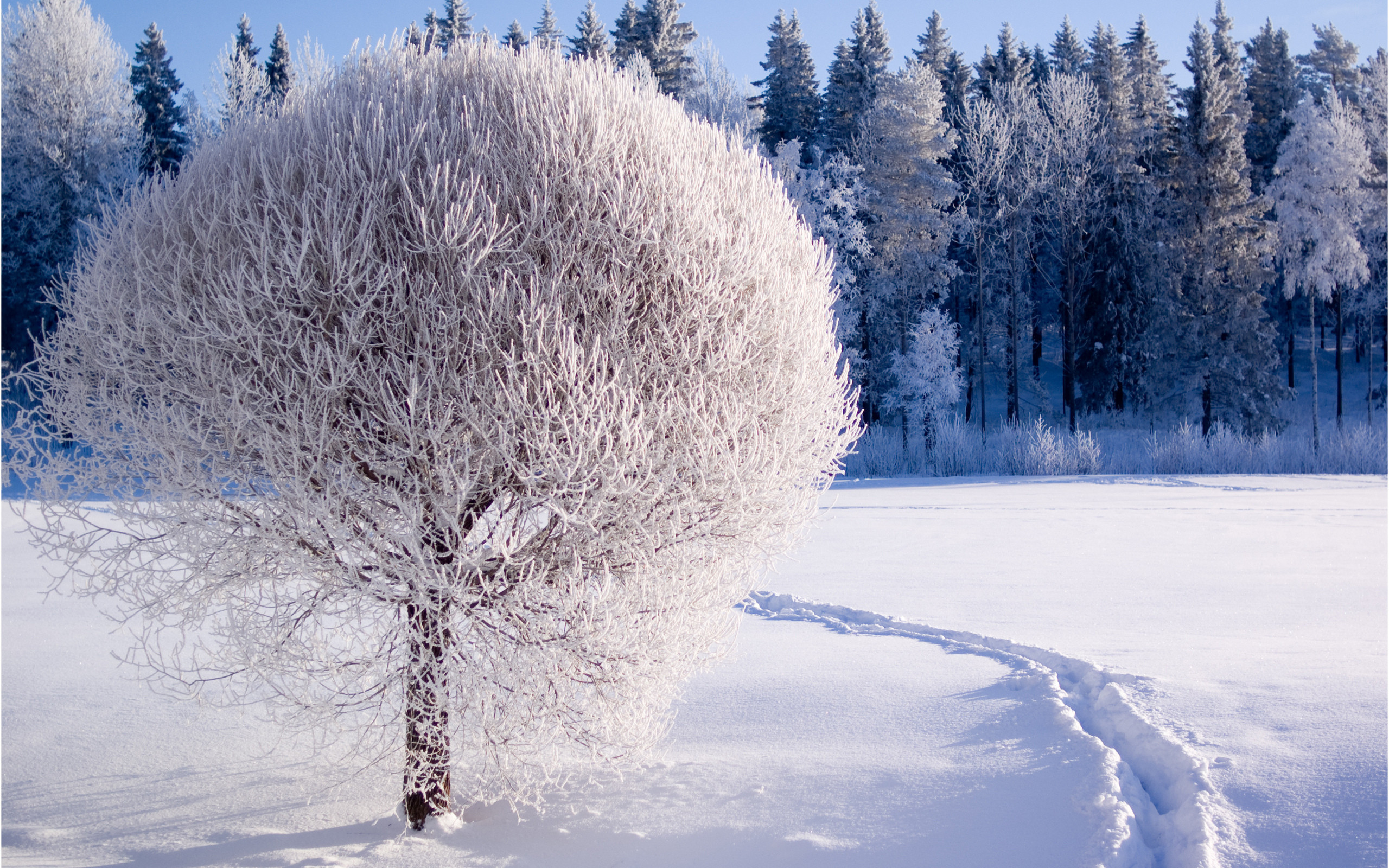 2560x1600 Winter Backgrounds