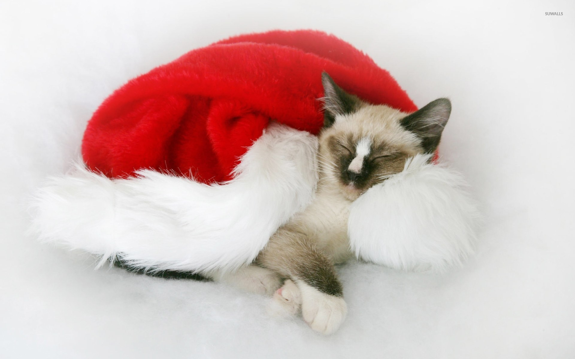 1920x1200 Christmas kitten wallpaper