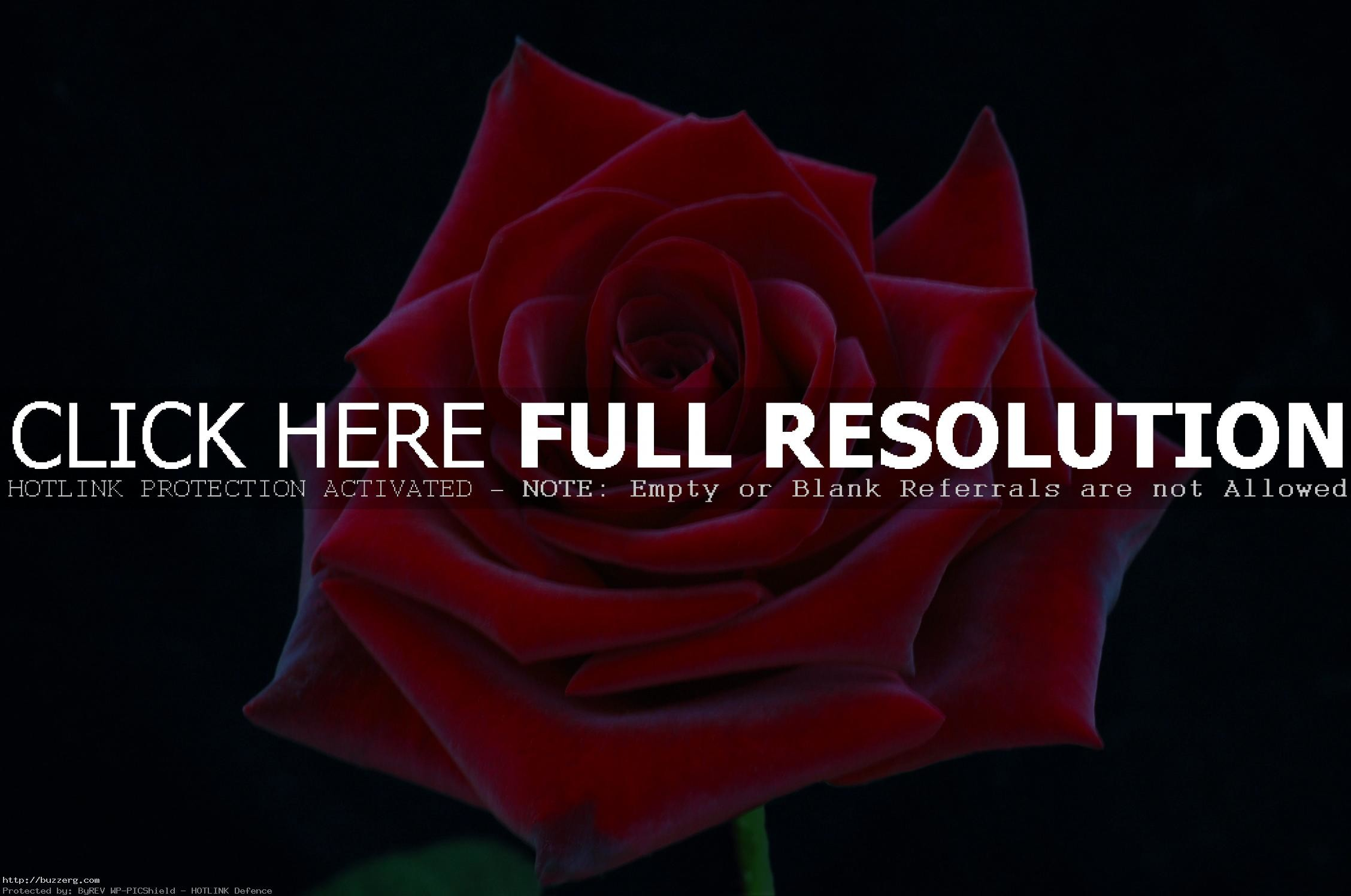 2256x1496 A Really Pretty Red Rose (id: 153962)