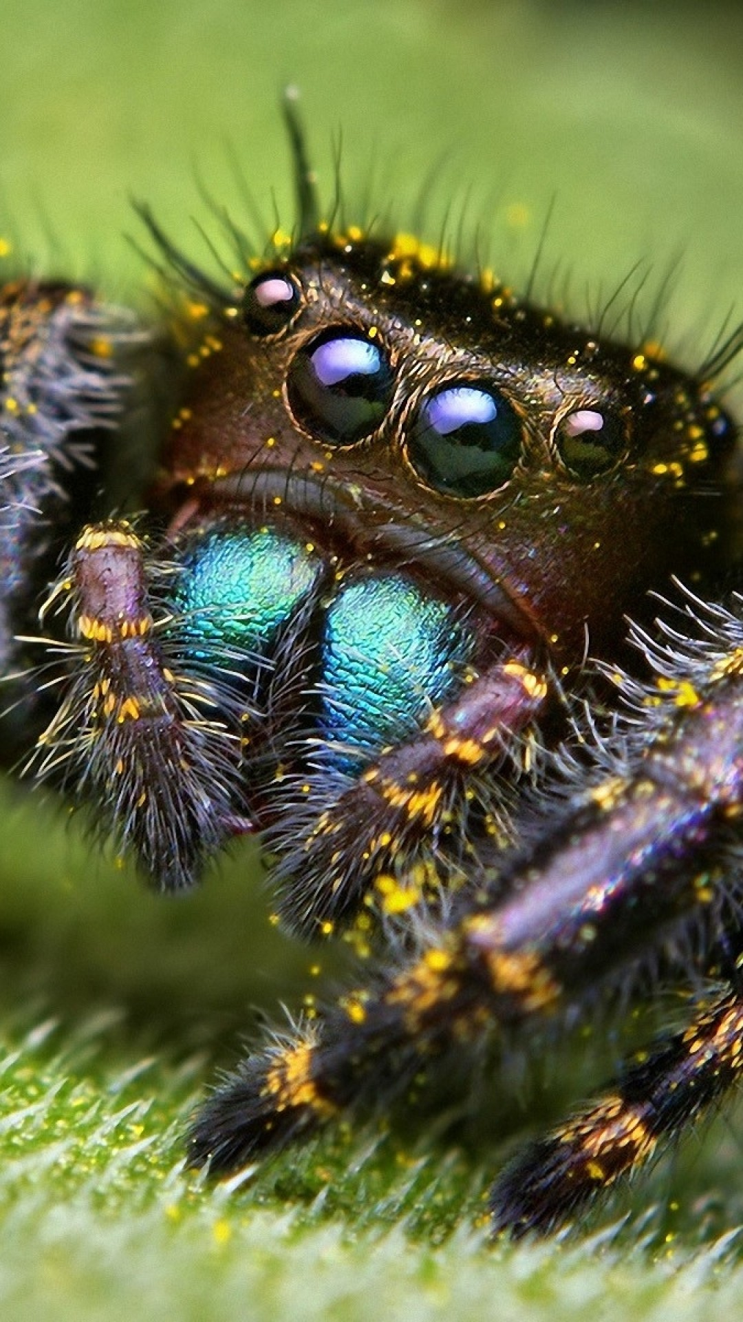 Scary Spider Wallpaper 65 Images