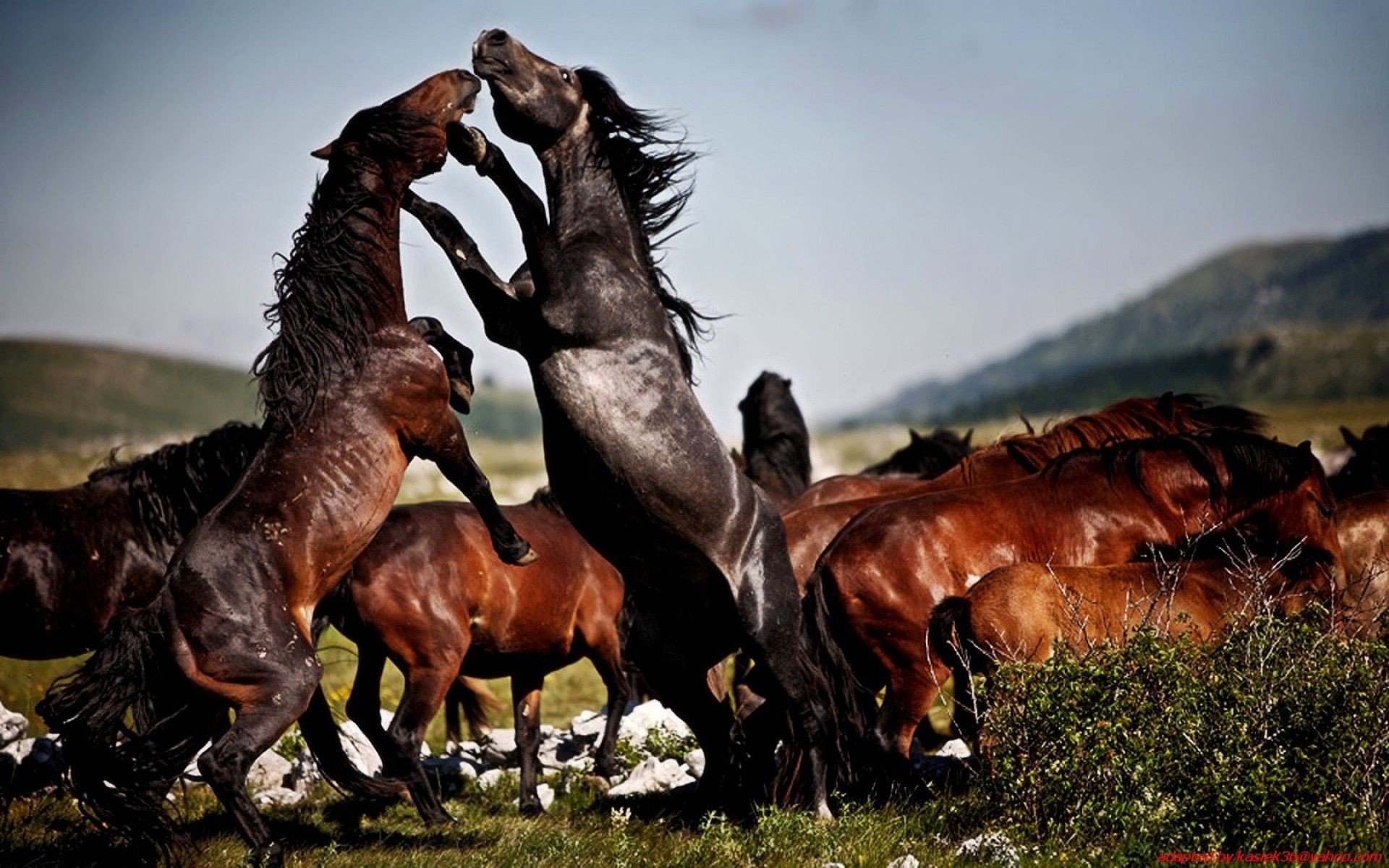 1920x1200 Pictures Of Wild Horse