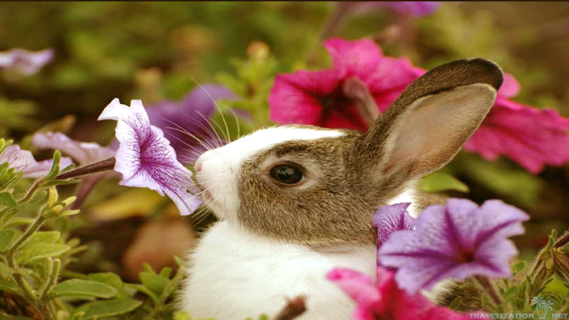 Cute baby animals wallpapers 61 images - Cute baby animal desktop backgrounds ...