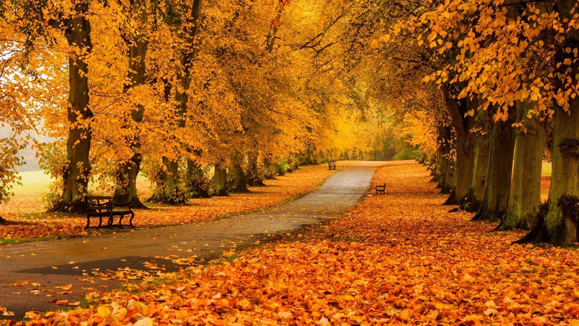 69 Fall desktop backgrounds  Download free amazing