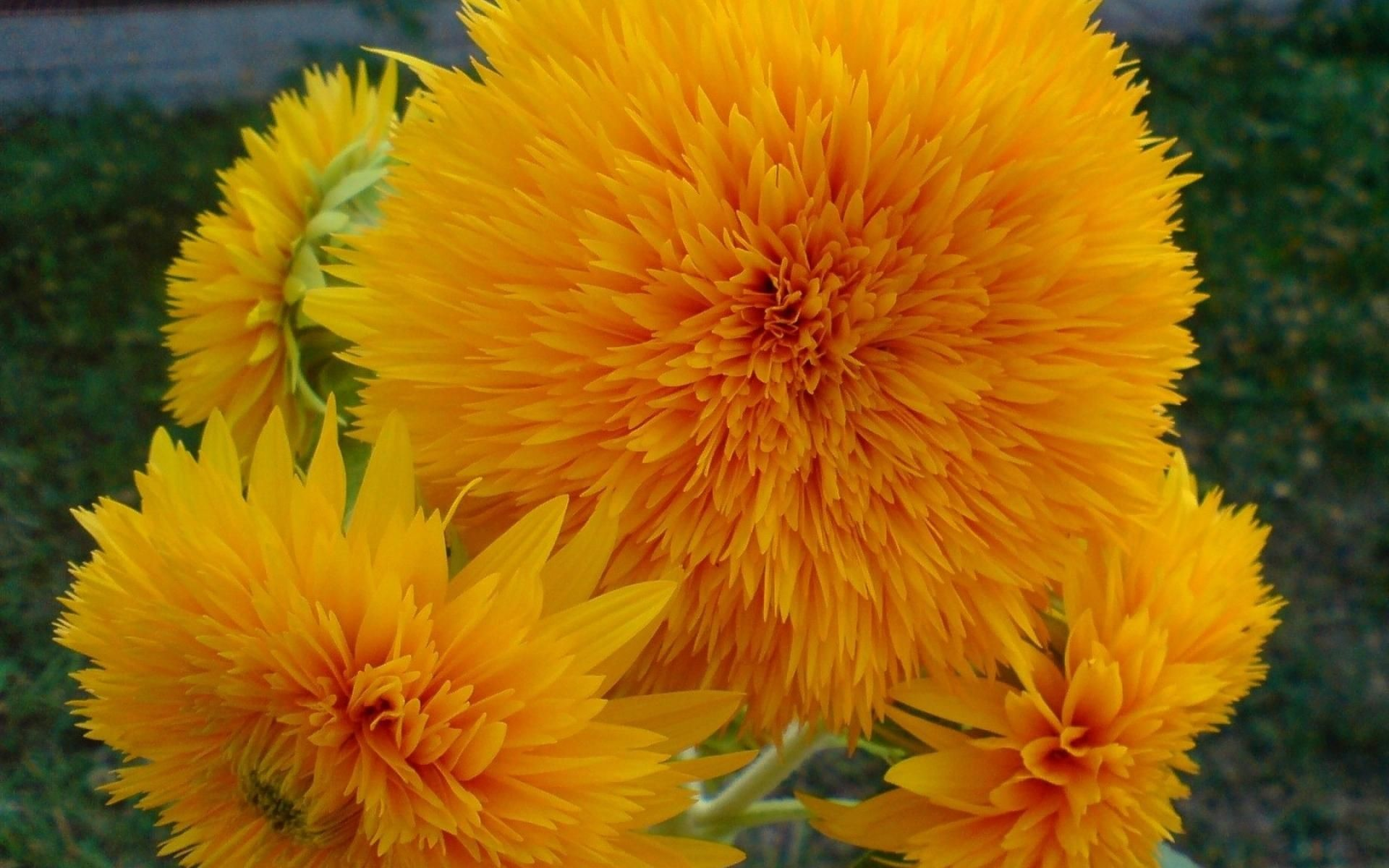 1920x1200 Nature Flowers Yellow Orange Colors Hd Wallpaper | HD Flowers Wallpaper  Free Download ...
