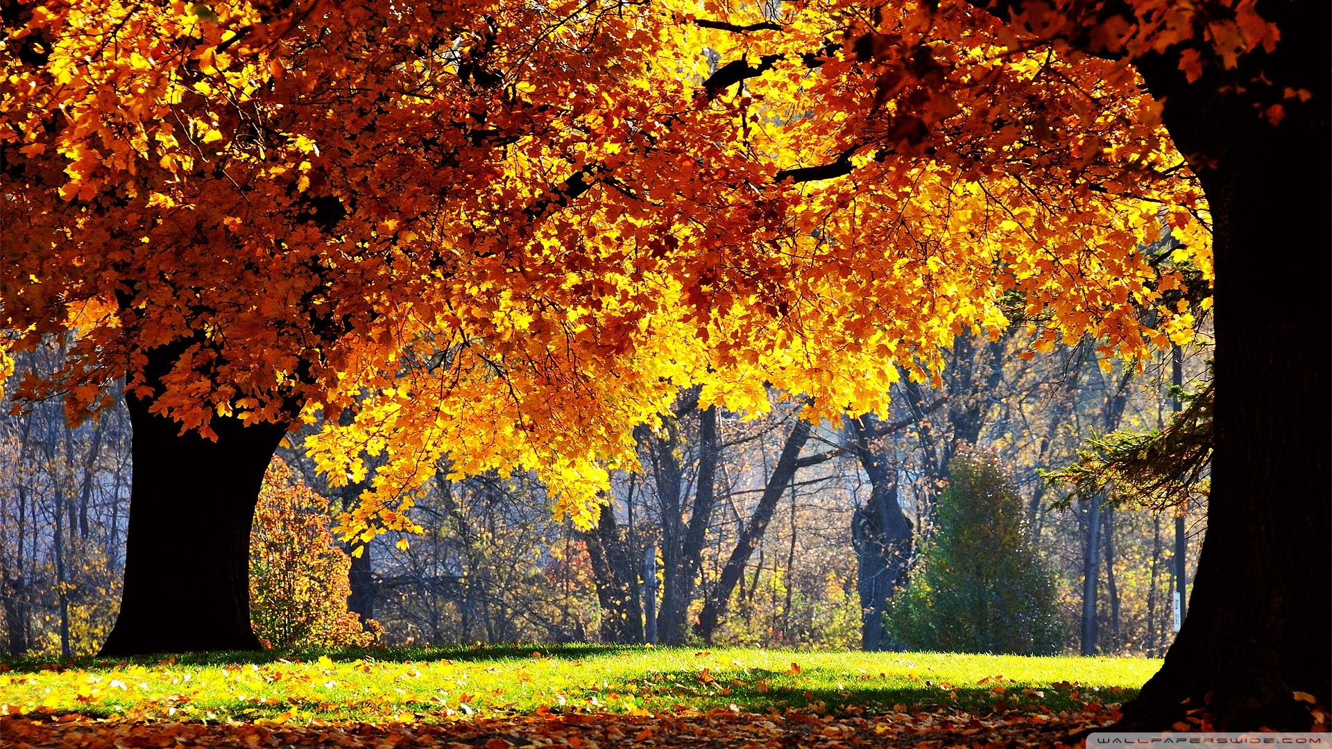 Beautiful Fall Pictures Wallpaper (60+ Images