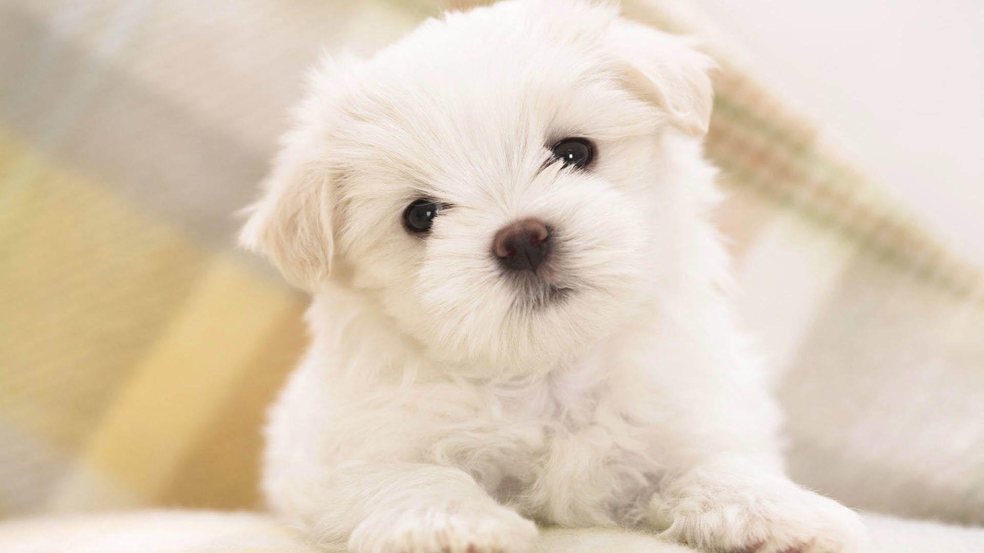 Cute Dog Wallpaper 77 Images