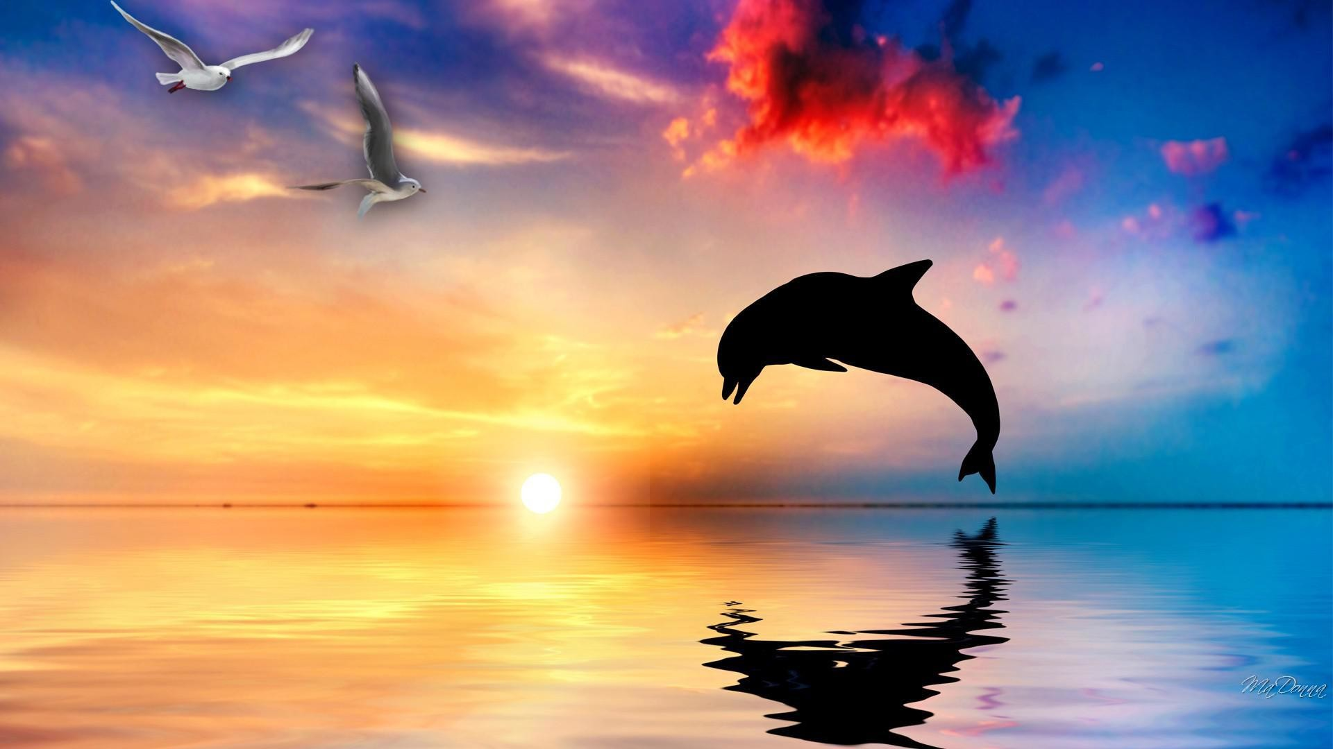 1920x1200 Dolphin Wallpaper Dolphins Animals Wallpapers