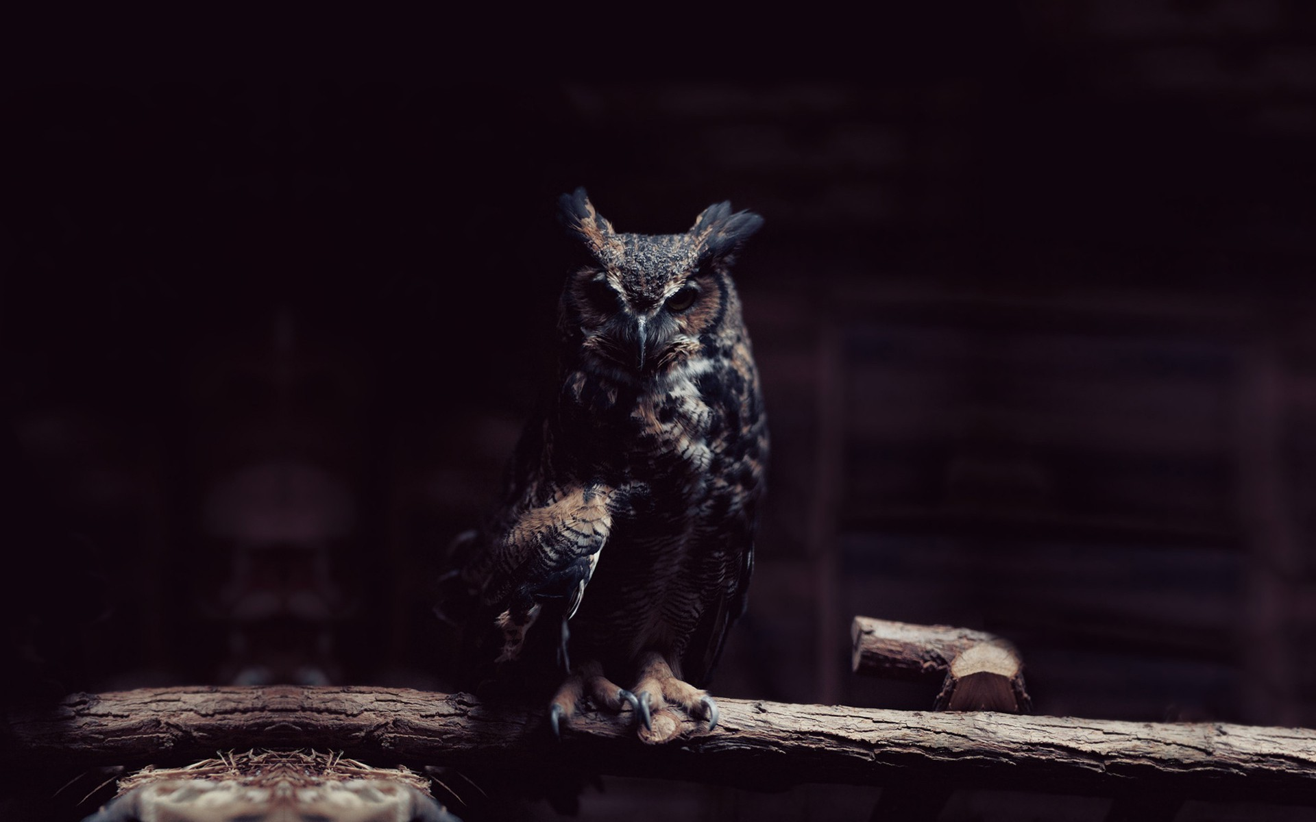 1920x1200 ... Owl in the shadows HD Wallpaper