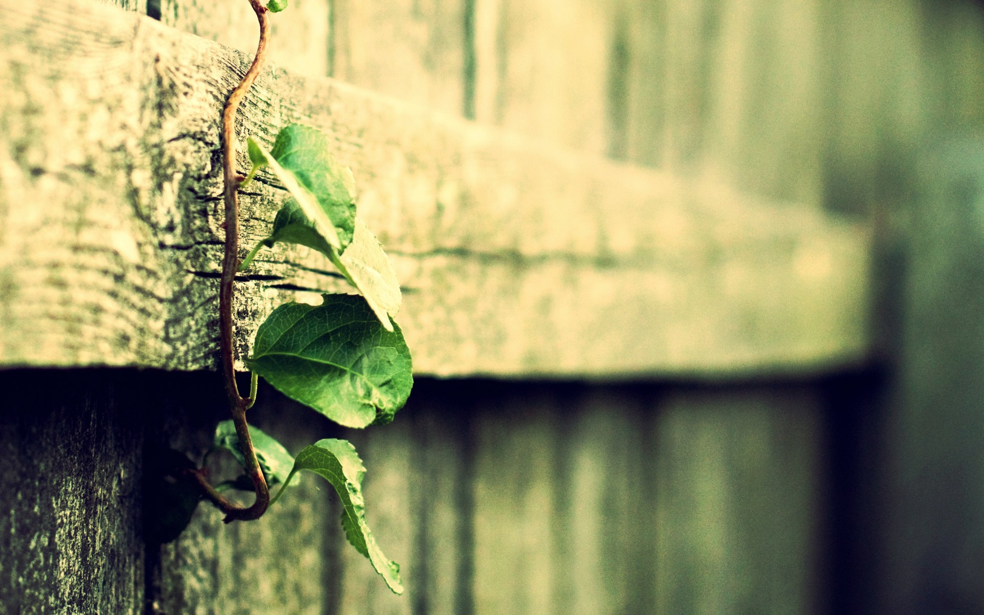 1920x1200 Wood Macro Filter Depth Of Field Plants Vines Leaves Vintage Wallpapers HD Desktop And Mobile Backgrounds
