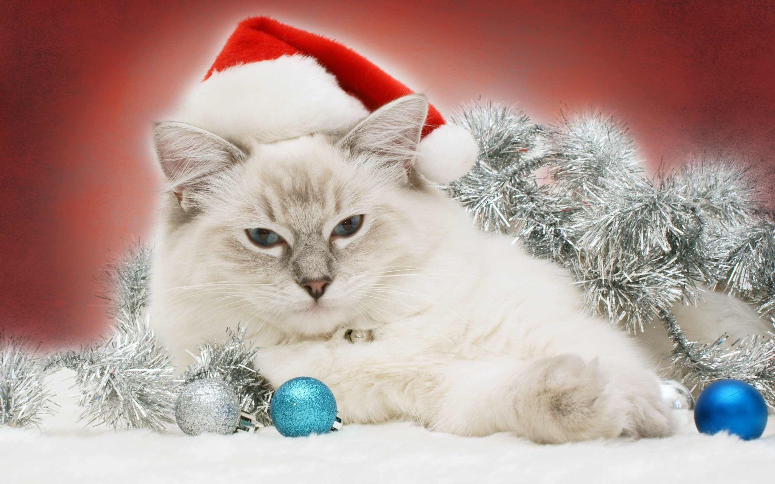 Christmas Cat Wallpaper (75+ images)