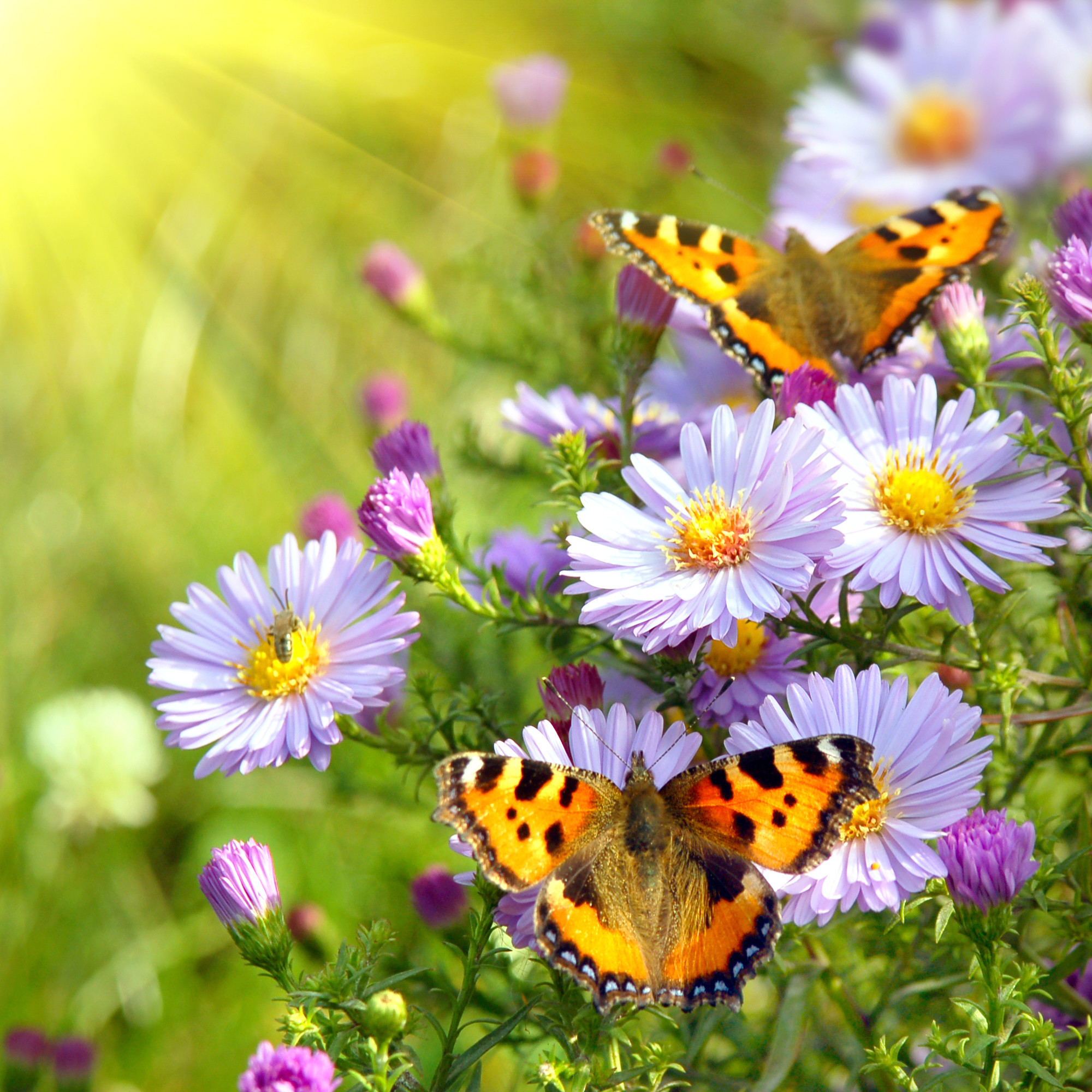 2000x2000 Spring Flowers And Butterflies Cool Wallpapers