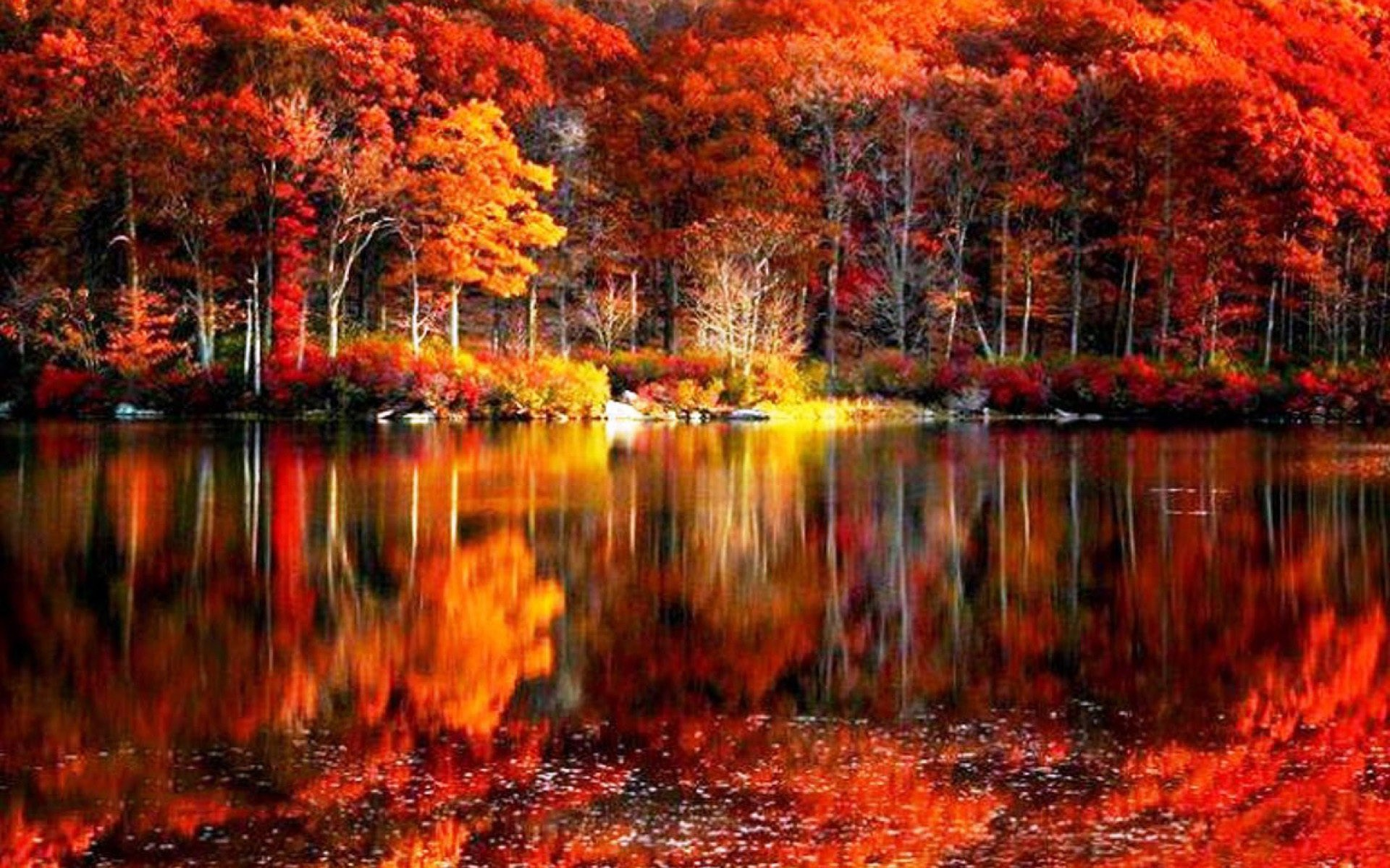 1920x1200 Autumn Lake Desktop Wallpaper. The Autumn Leaves Near Lake