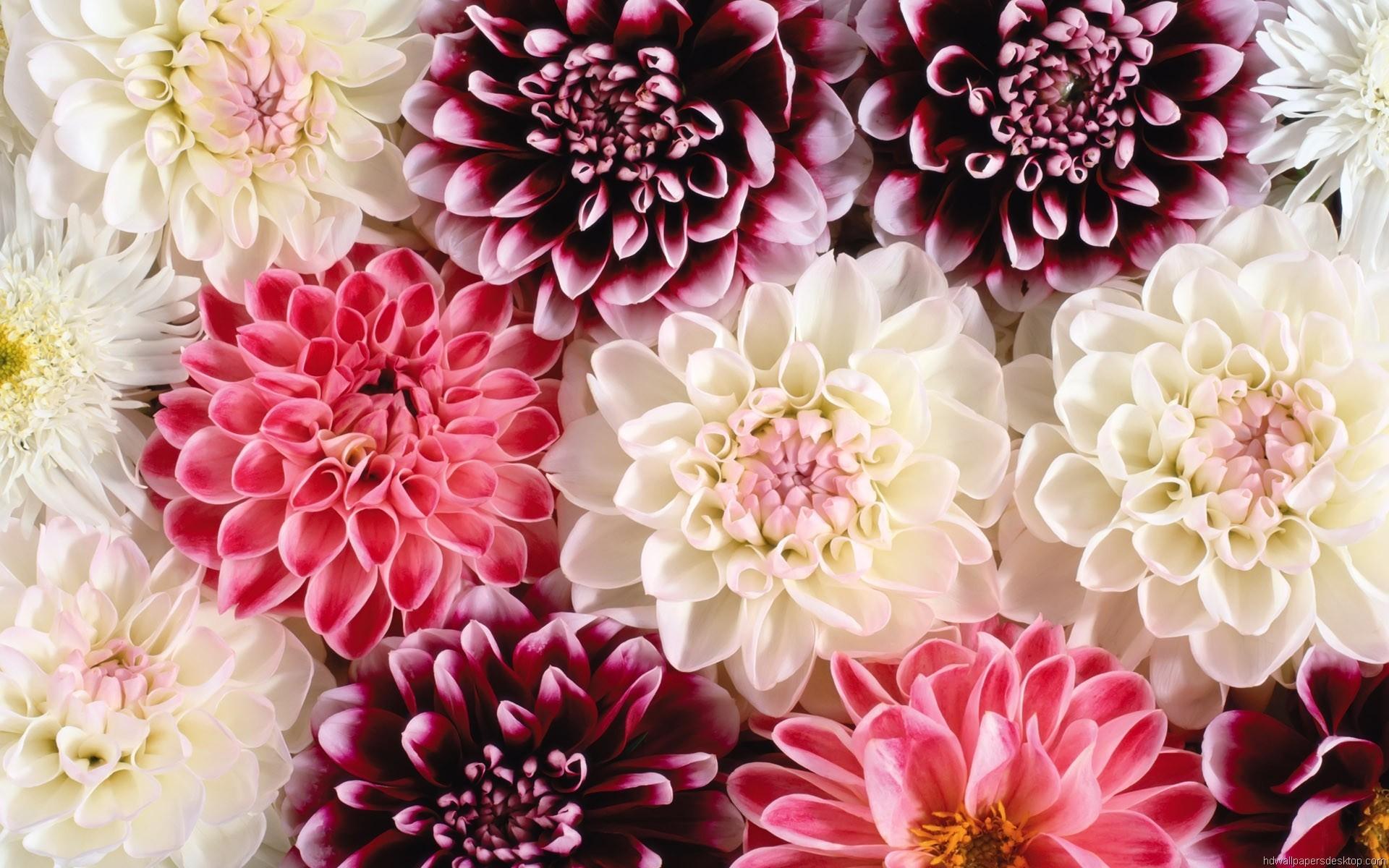 Floral Desktop Backgrounds (51+ images)