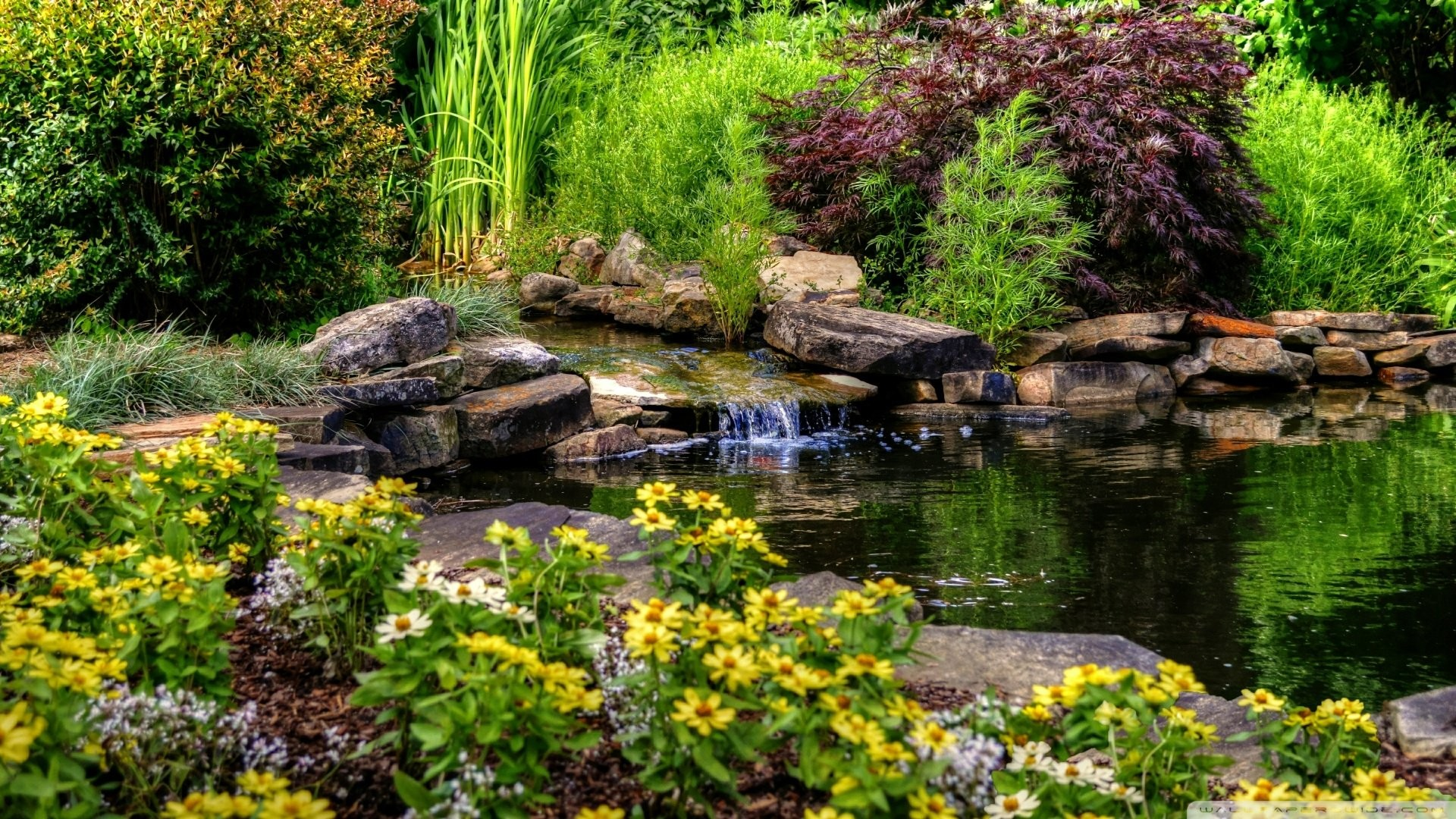 1920x1080 Small pond with flowers-wallpaper- wallpaper |  | 825177  | WallpaperUP