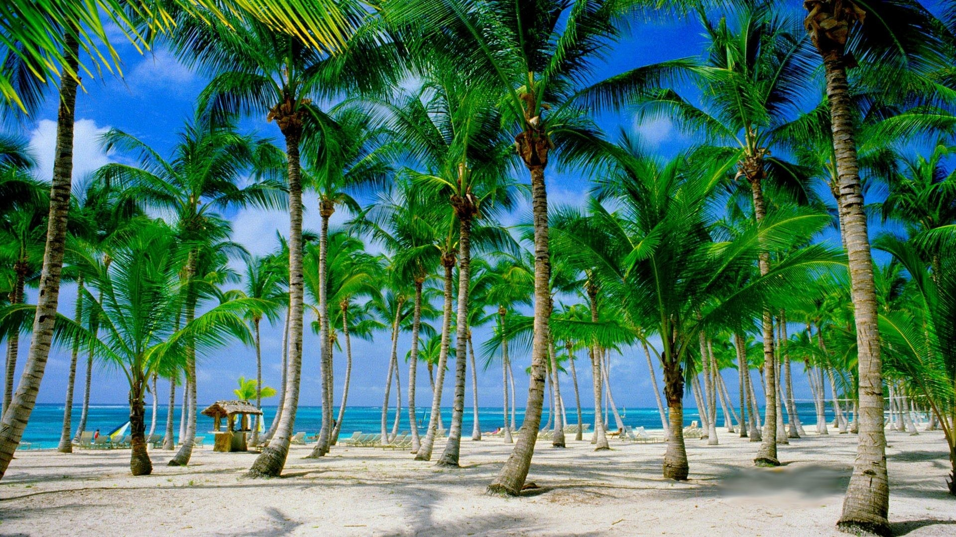 1920x1080 Beach Tropical Paradise Palms Summer Wallpaper With Scenes