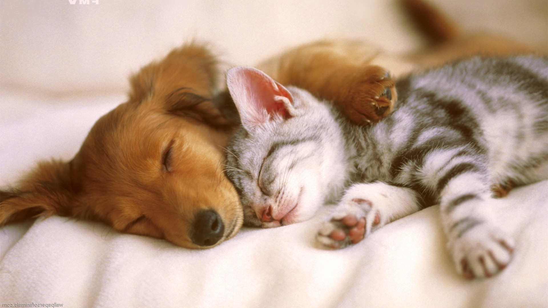 cute cats and dogs wallpaper 54 images