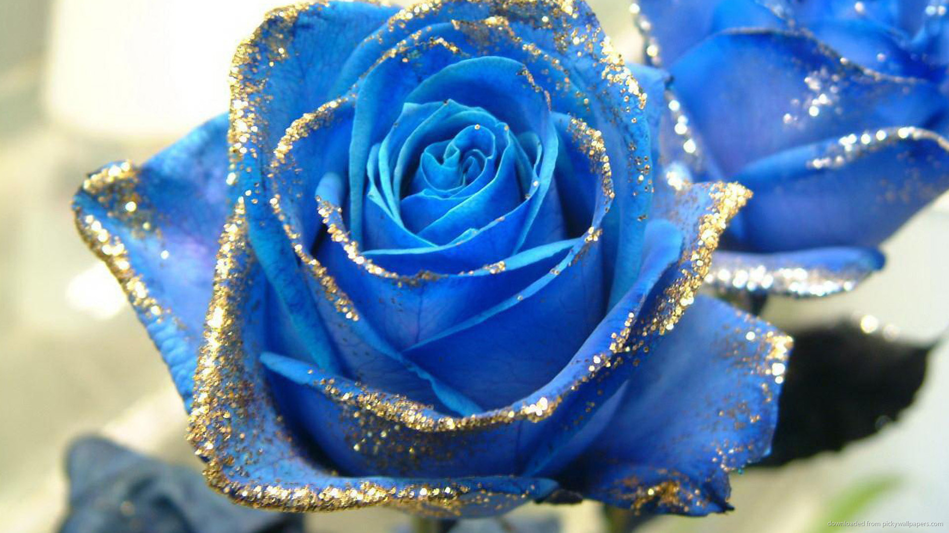 1920x1080 Blue Rose With Gold Glitter Wallpaper picture