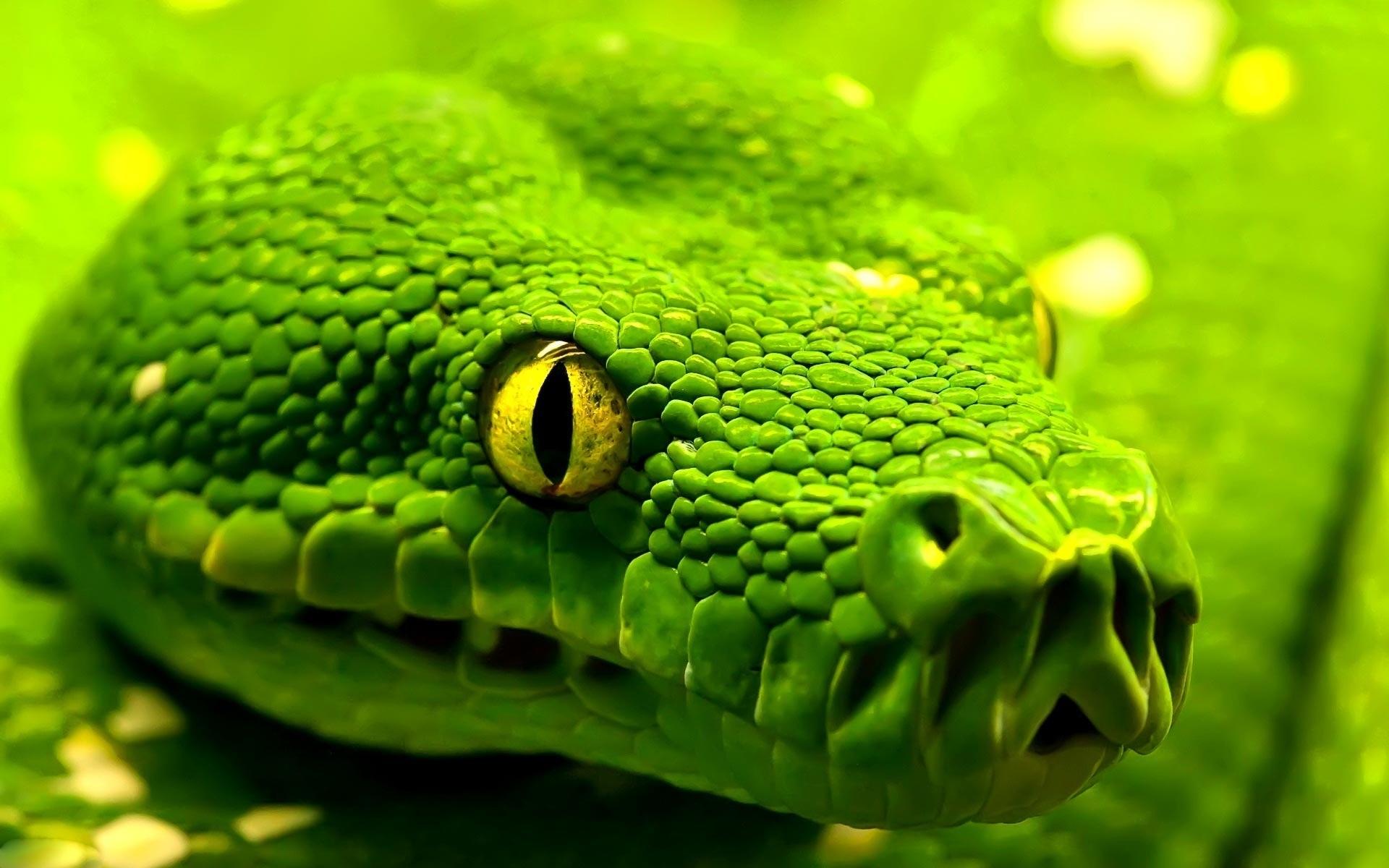 1920x1080 Green Dari Snake