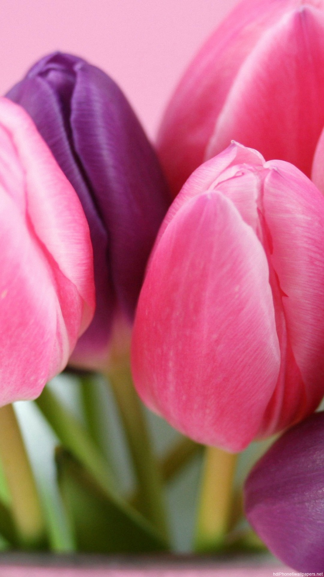 Tulip Flower Wallpaper (67+ images)