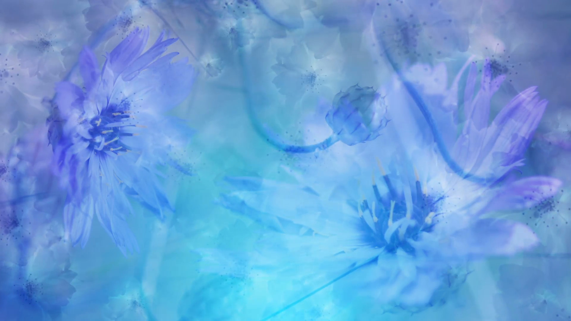 1920x1080 Colorful flowers background animation loop