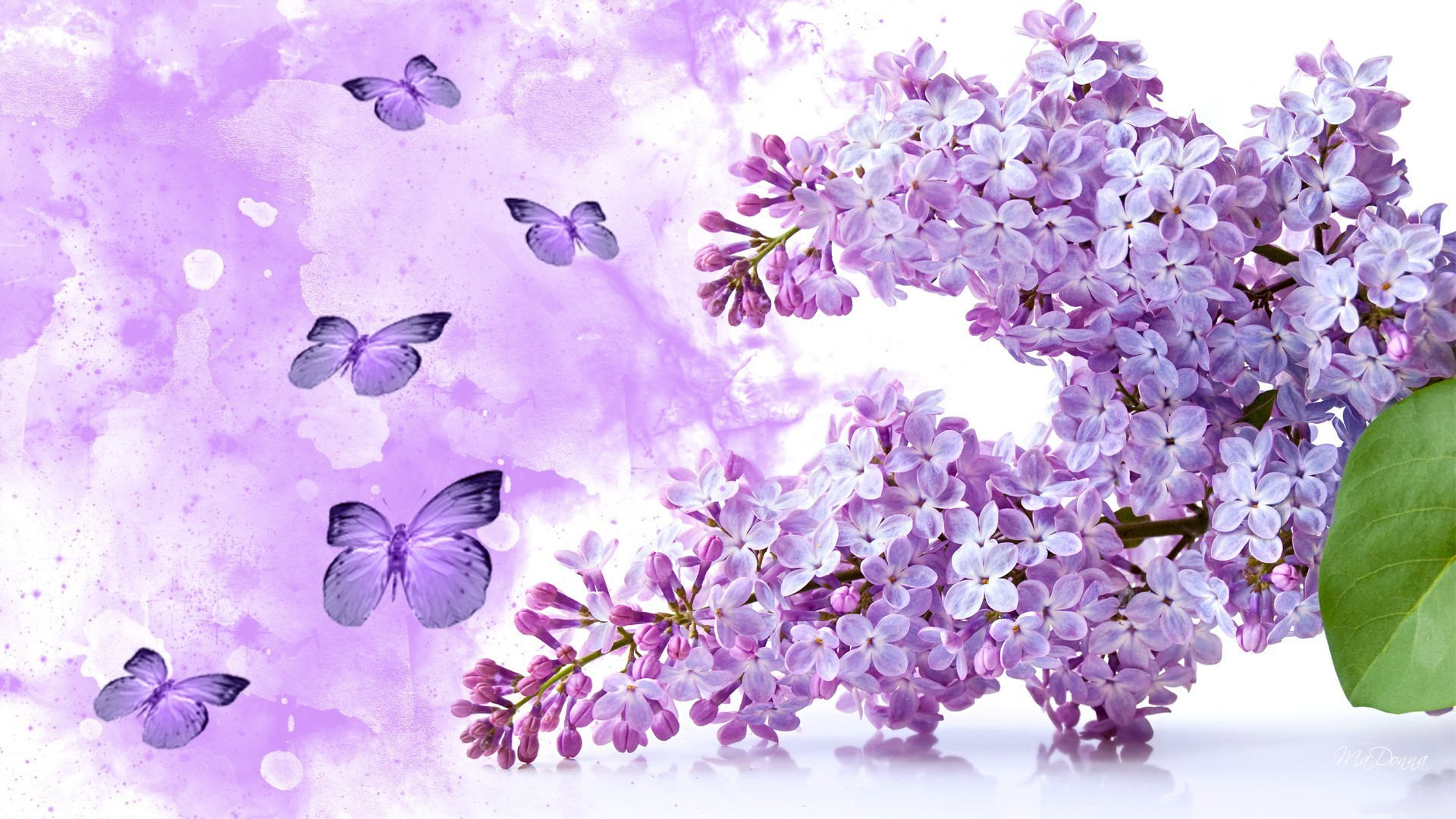 Beautiful butterflies and flowers wallpapers 56 images for Lilac butterfly wallpaper