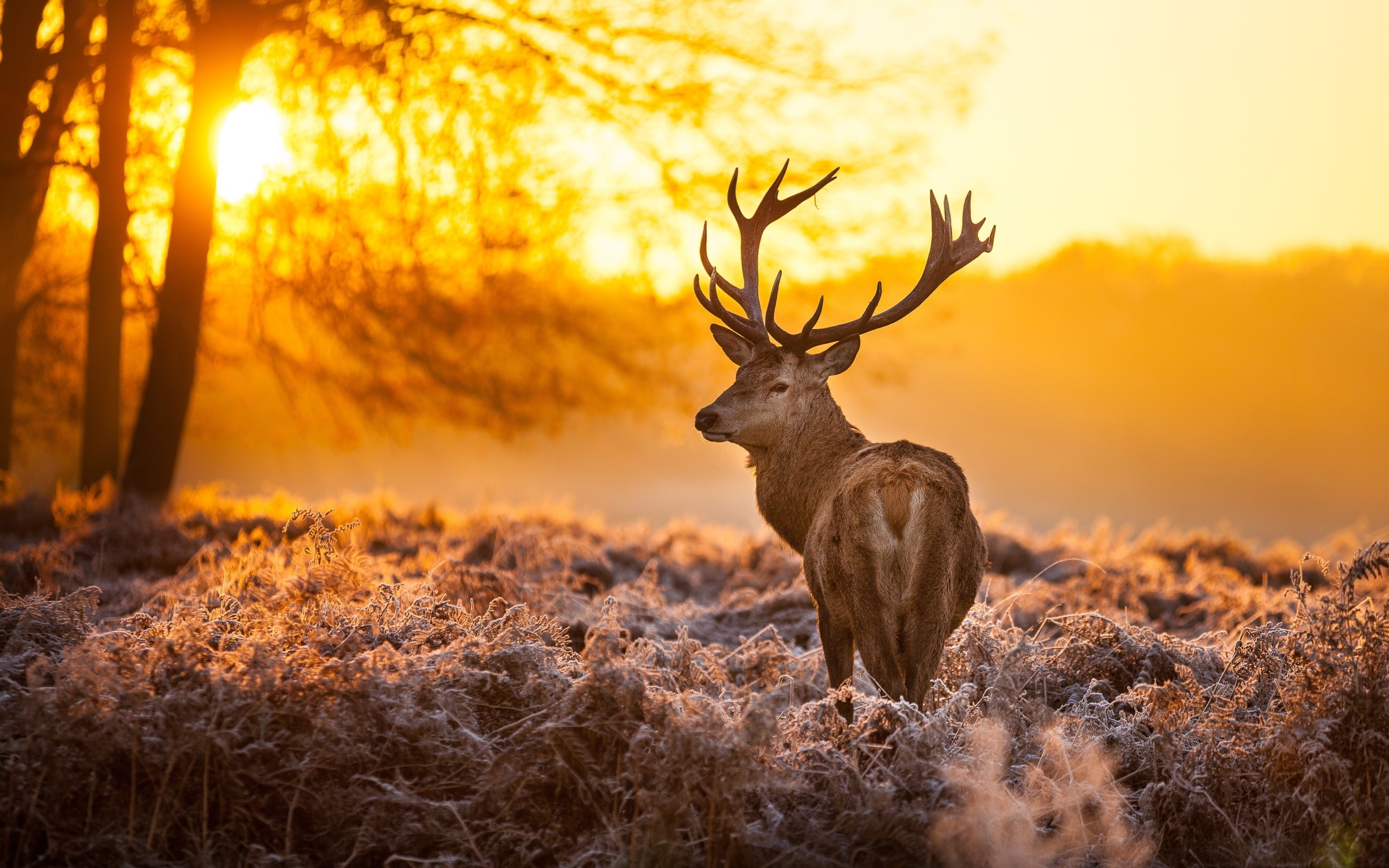 Deer Backgrounds For Iphone: Deer Hunting Wallpaper For Computer (57+ Images