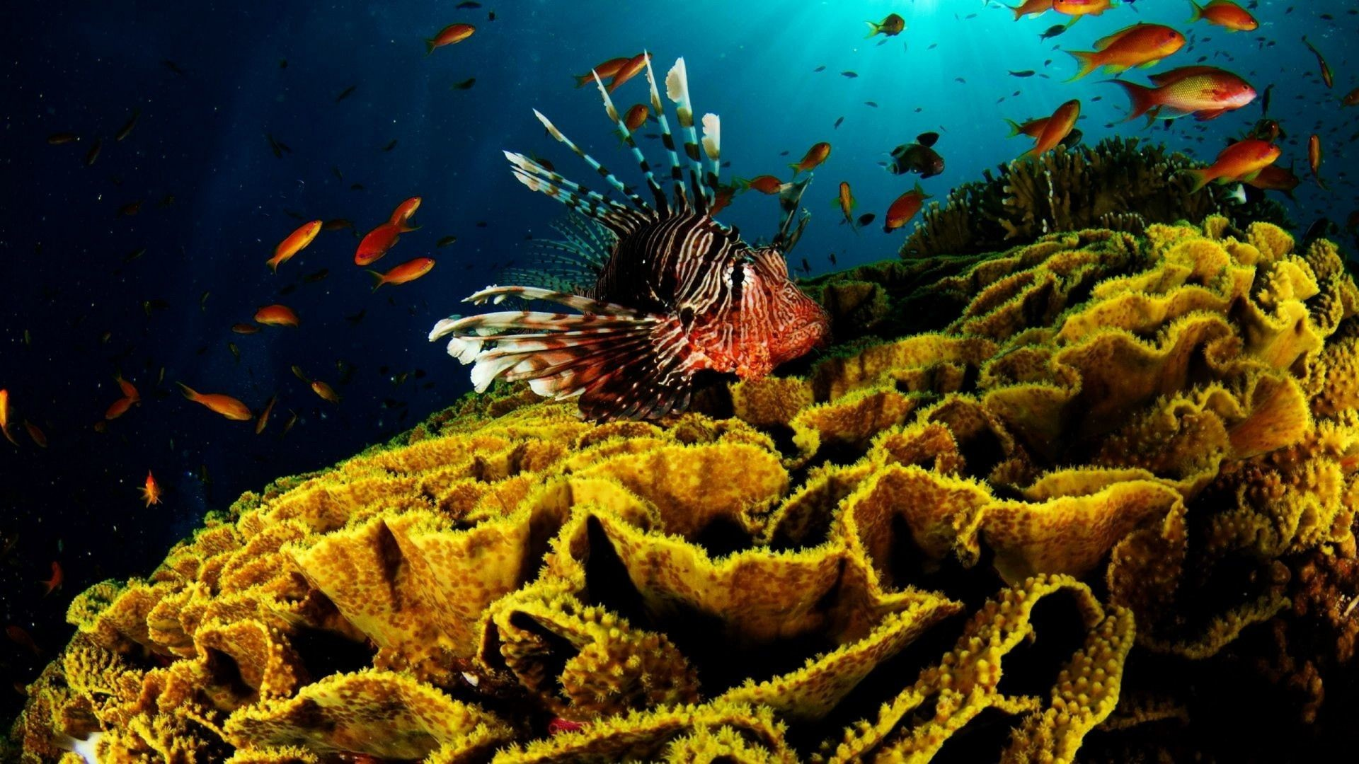 1920x1080 Coral Reef Wallpaper 25134