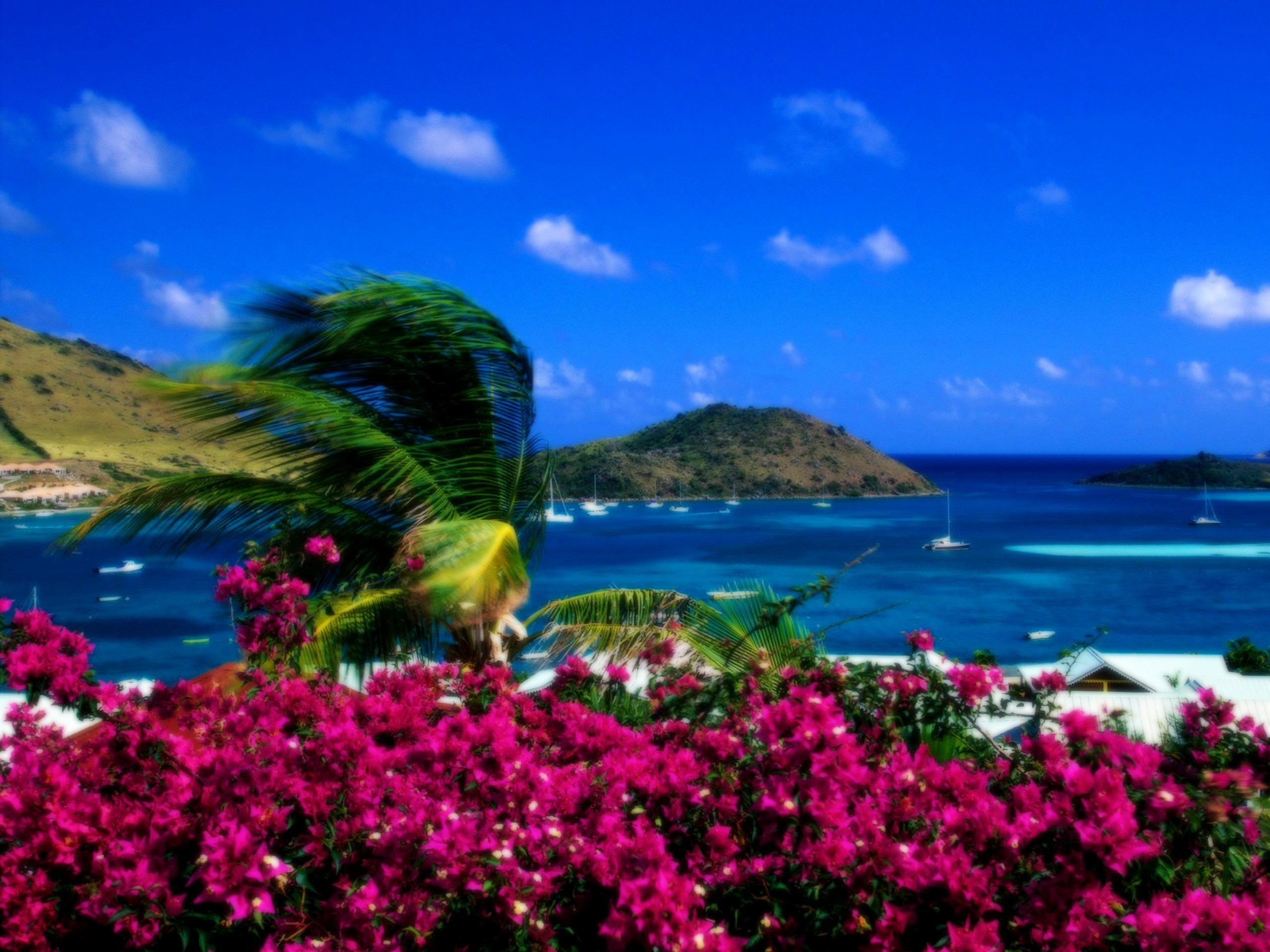 2560x1920 Landscapes Beach Wallpaper  Landscapes, Beach, Flowers, Palm .