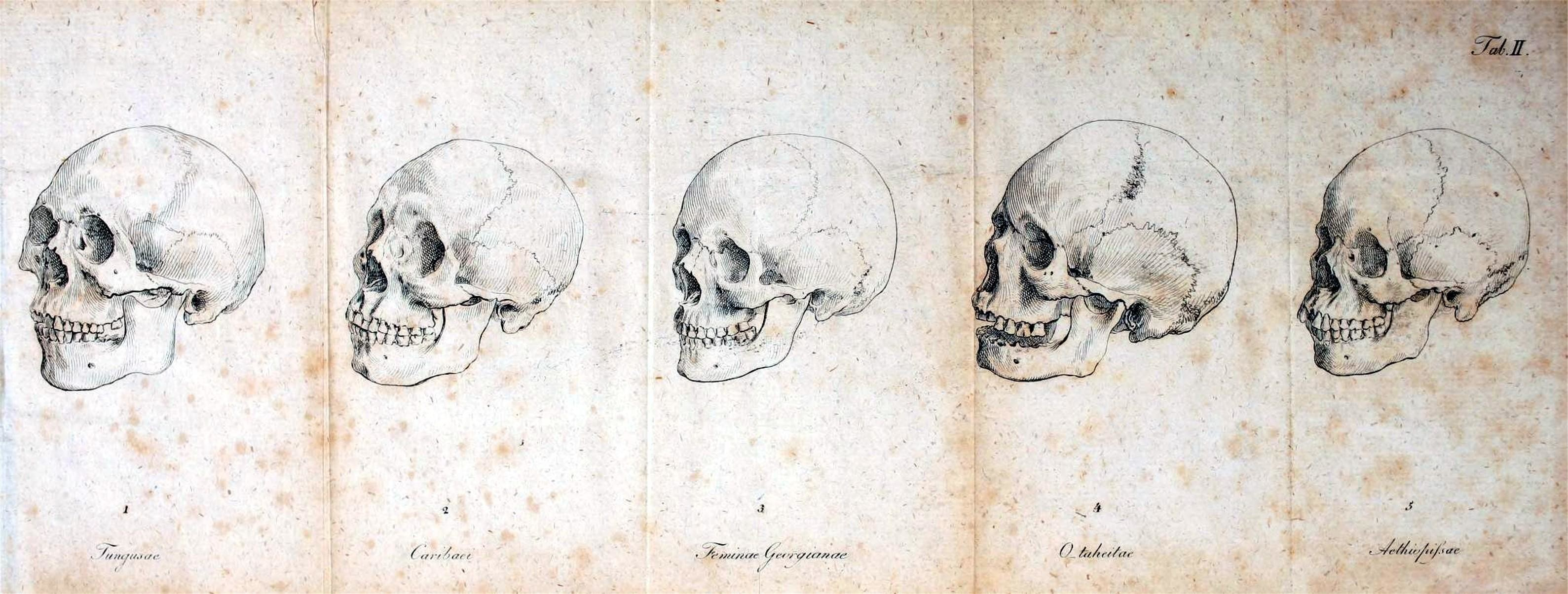 Human Anatomy Wallpaper (54+ images)