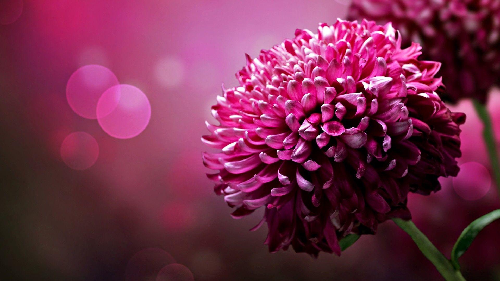 Flower Computer Wallpaper Backgrounds 72 Images