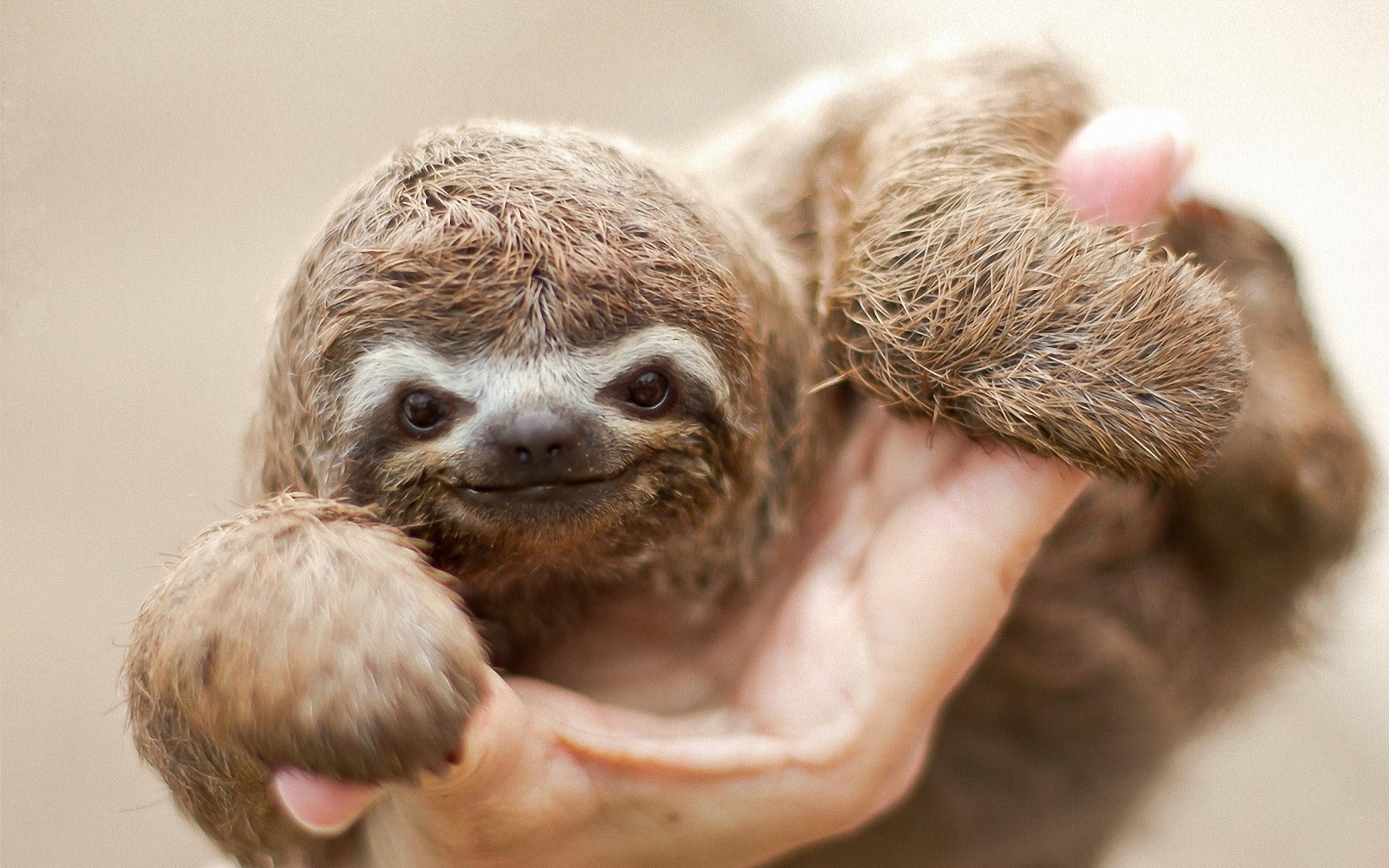 1920x1200 Sloth · sloth wallpaper download free