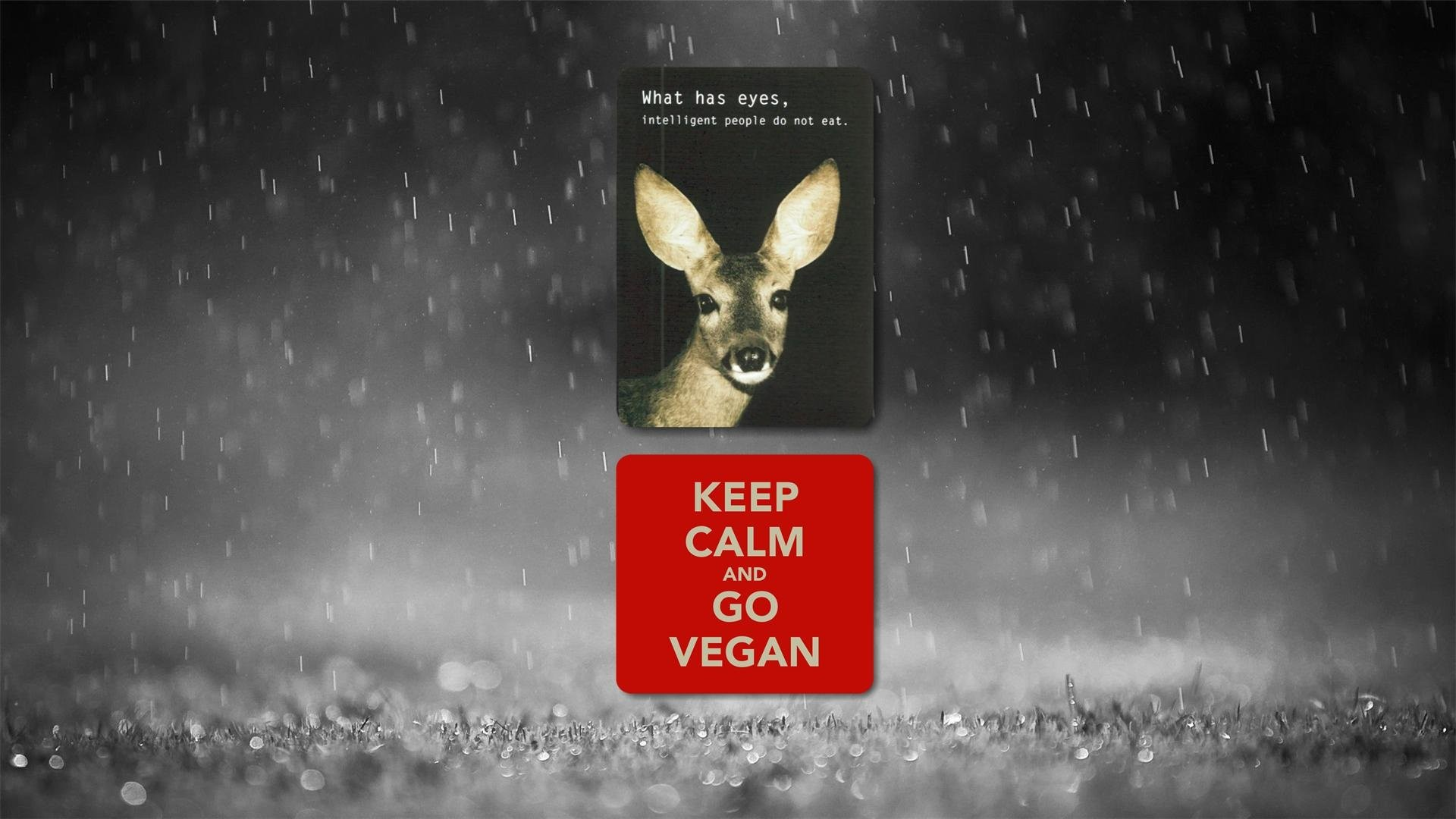 1920x1080 vegan deer vegetarian 4k -#main