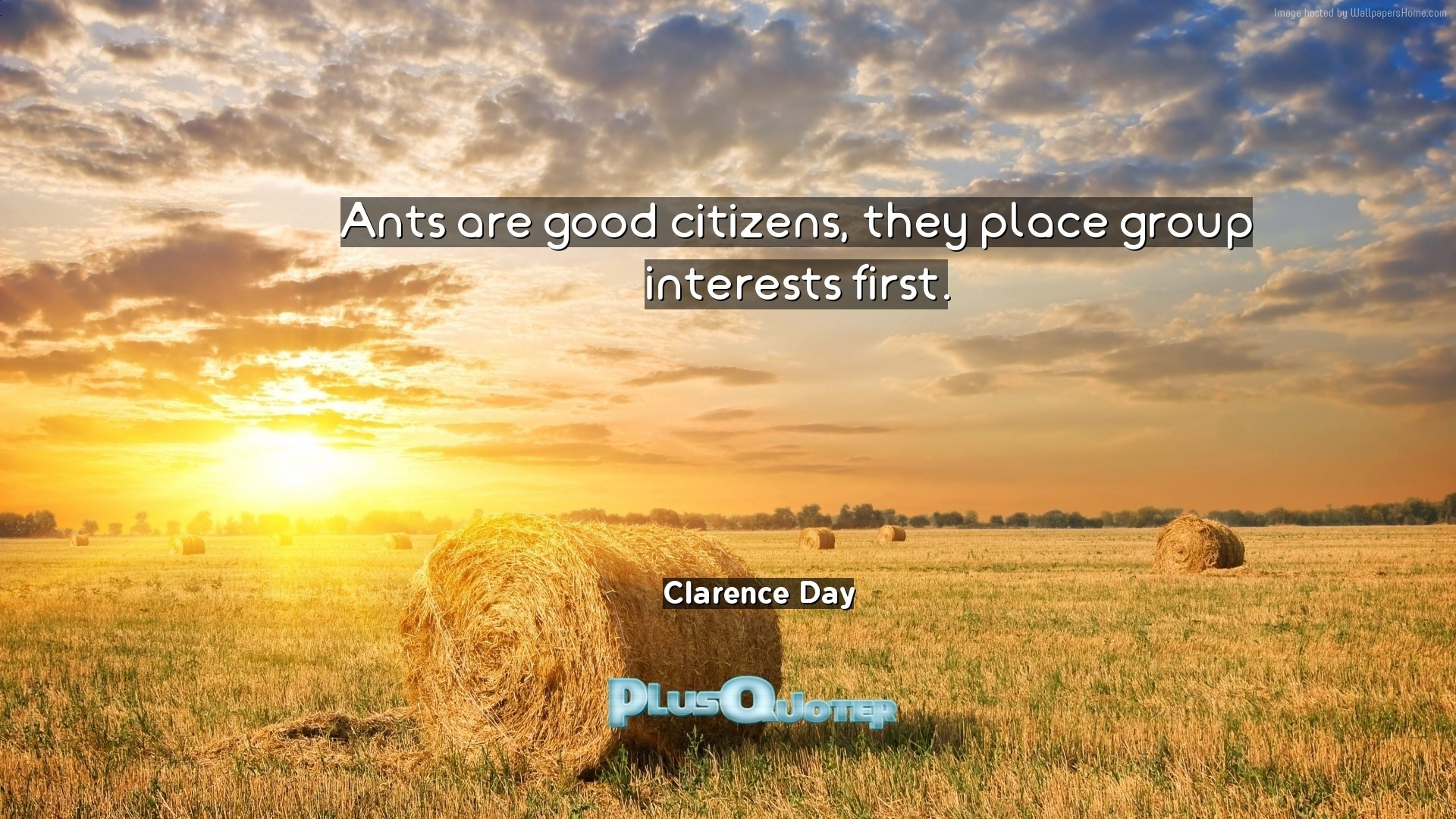 "1920x1080 Download Wallpaper with inspirational Quotes- ""Ants are good citizens, they  place group interests. """