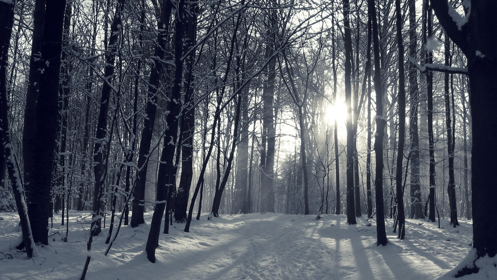 1920x1080 Snowy Winter Forest Wallpapers -  - 1064989