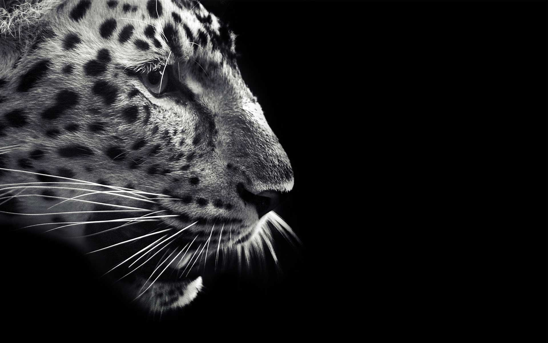 1920x1200 3010674 Jaguar Wallpapers | Download for Free