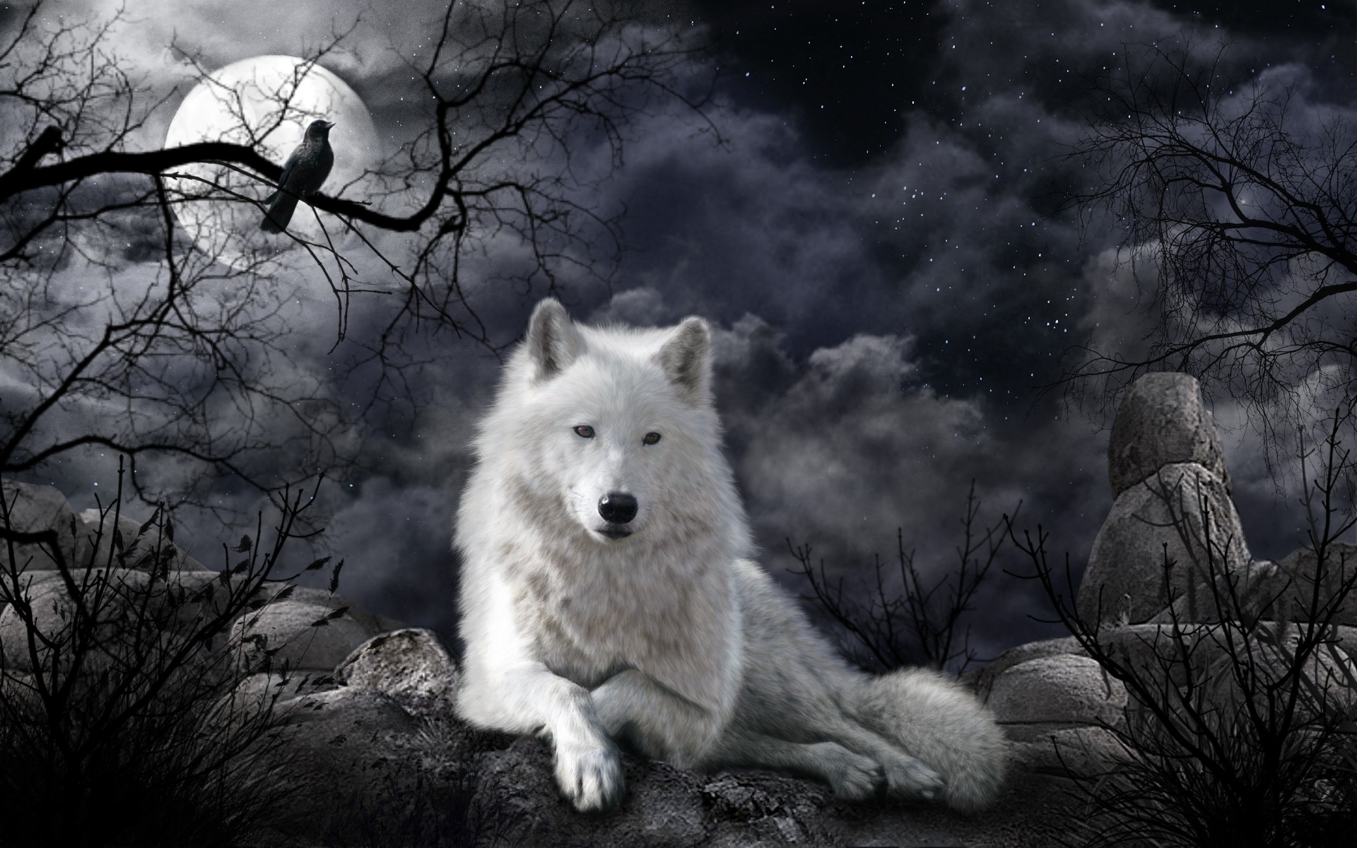 1920x1200 Animal - Wolf Artistic White Wolf Raven Night Wallpaper