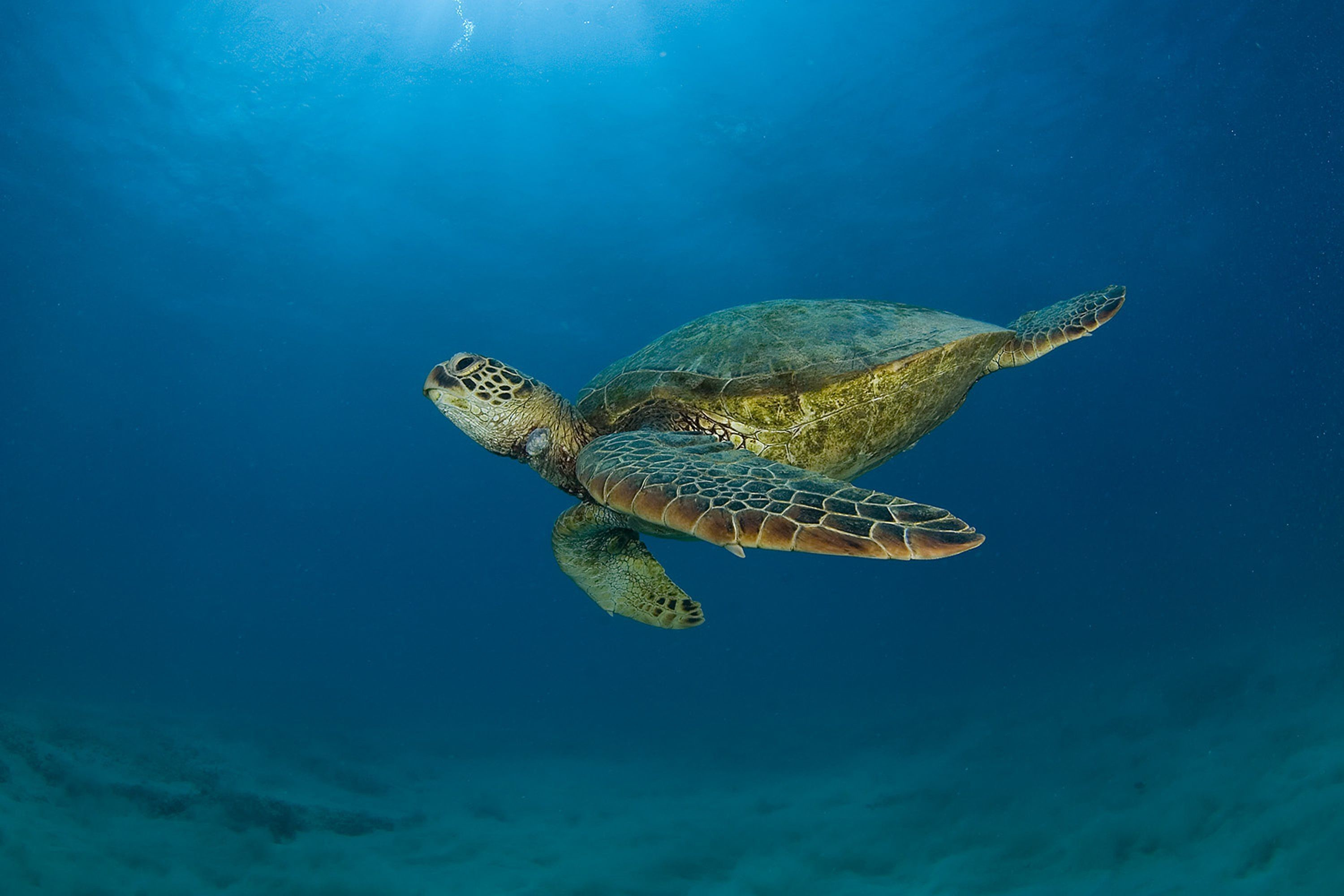 Sea Turtle Wallpaper Backgrounds (55+ images)