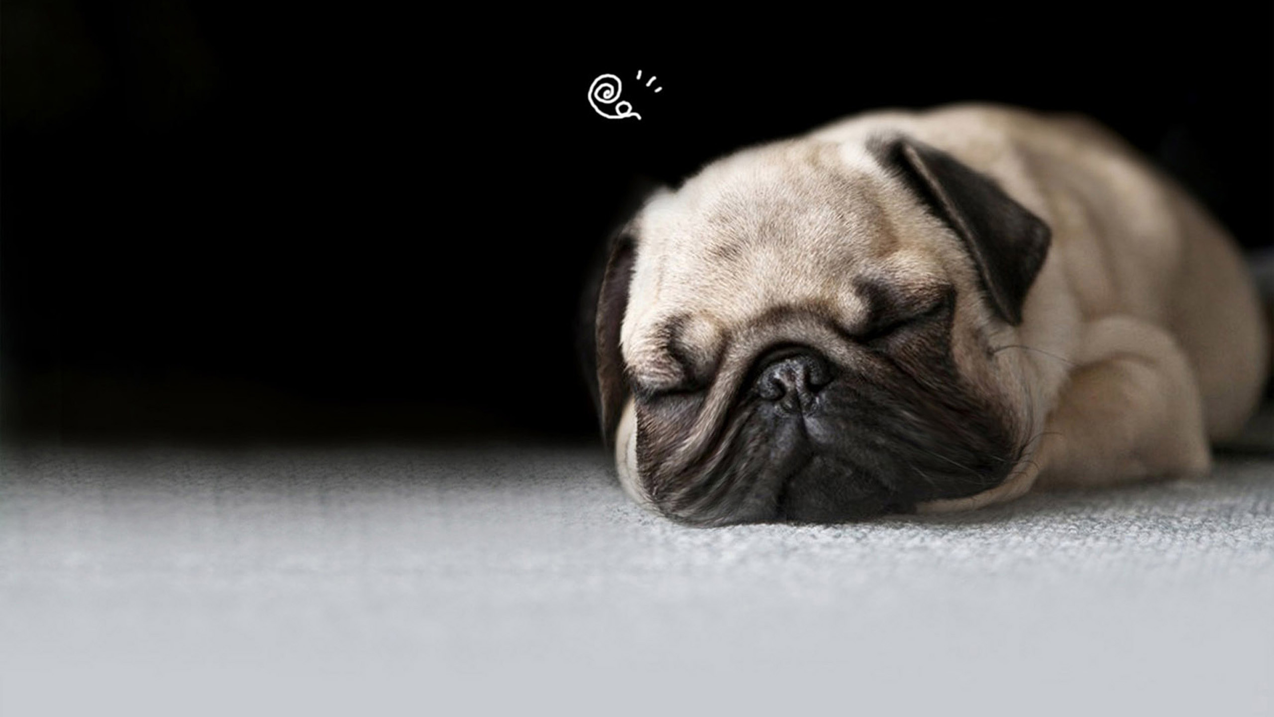 Ultra Dog Food >> Pug Puppy Wallpaper (66+ images)