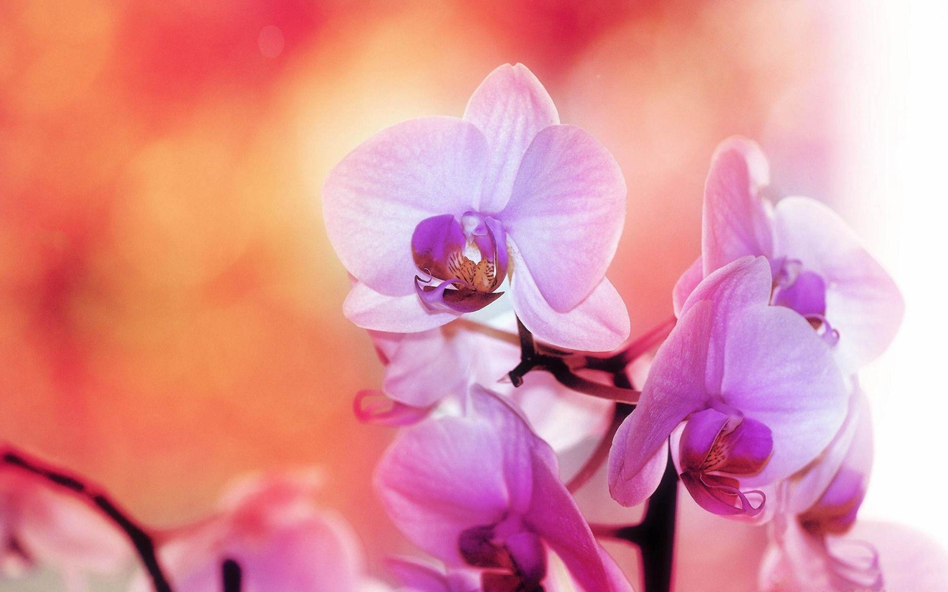 1920x1200 Purple white orchids Wallpapers | Pictures