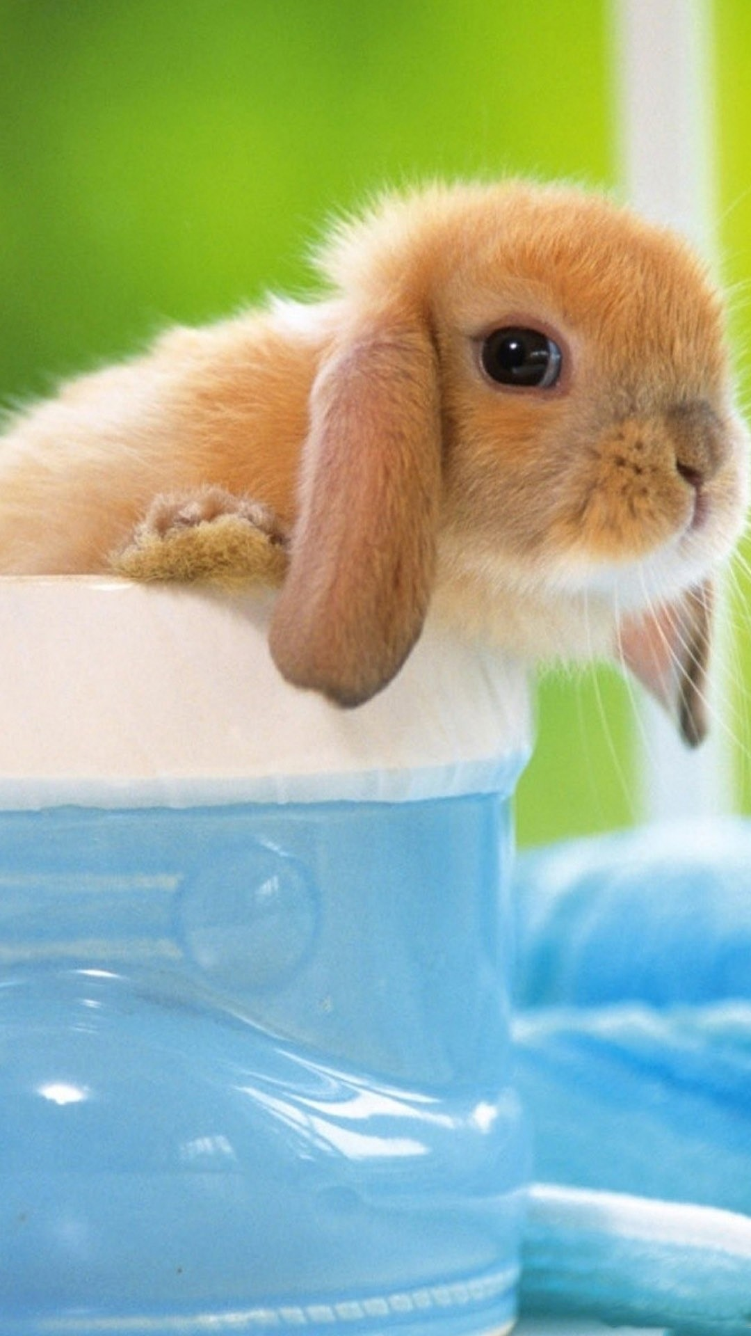 Cute Bunny Wallpapers 68 Images