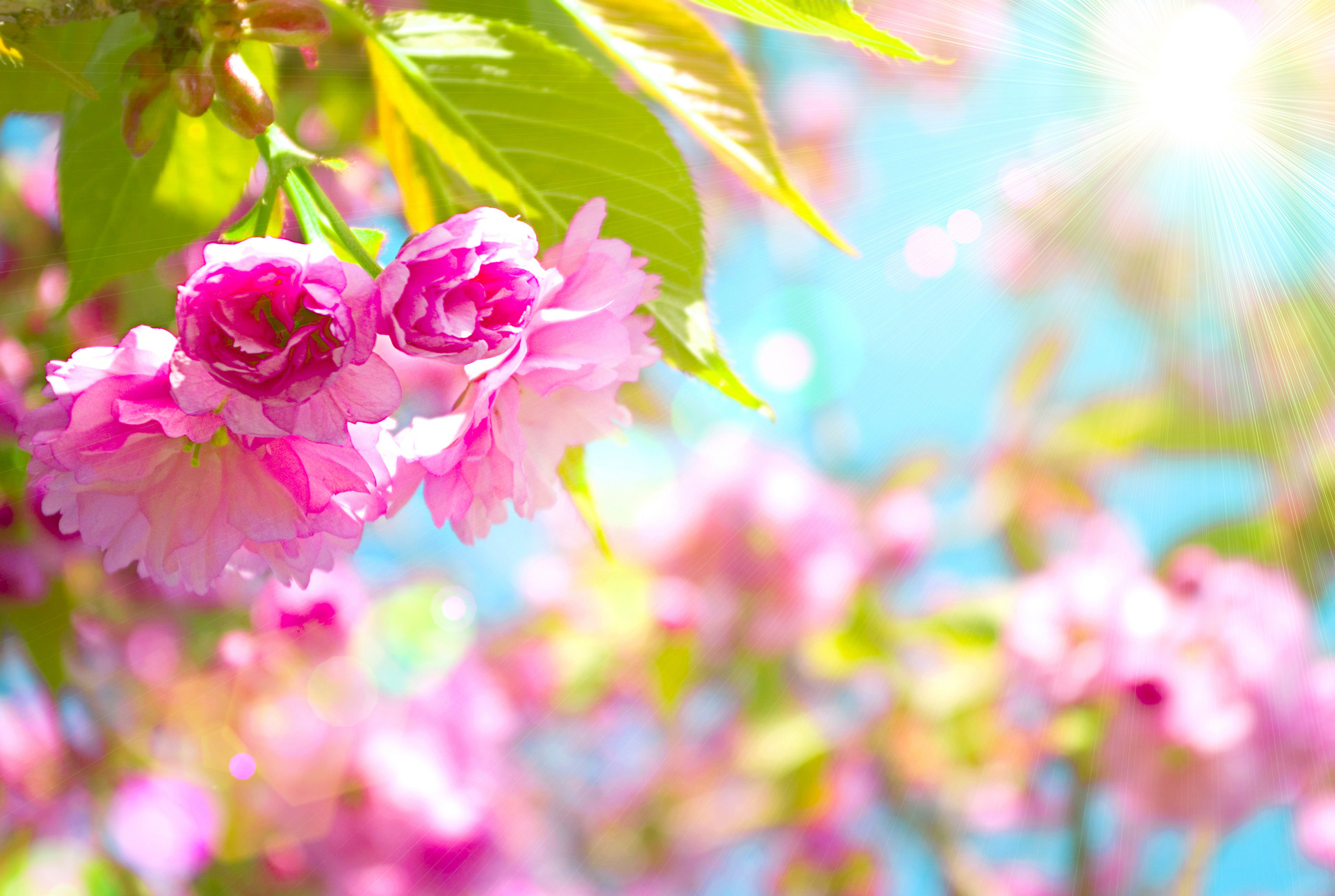 spring wallpaper and screensavers hd 70 images