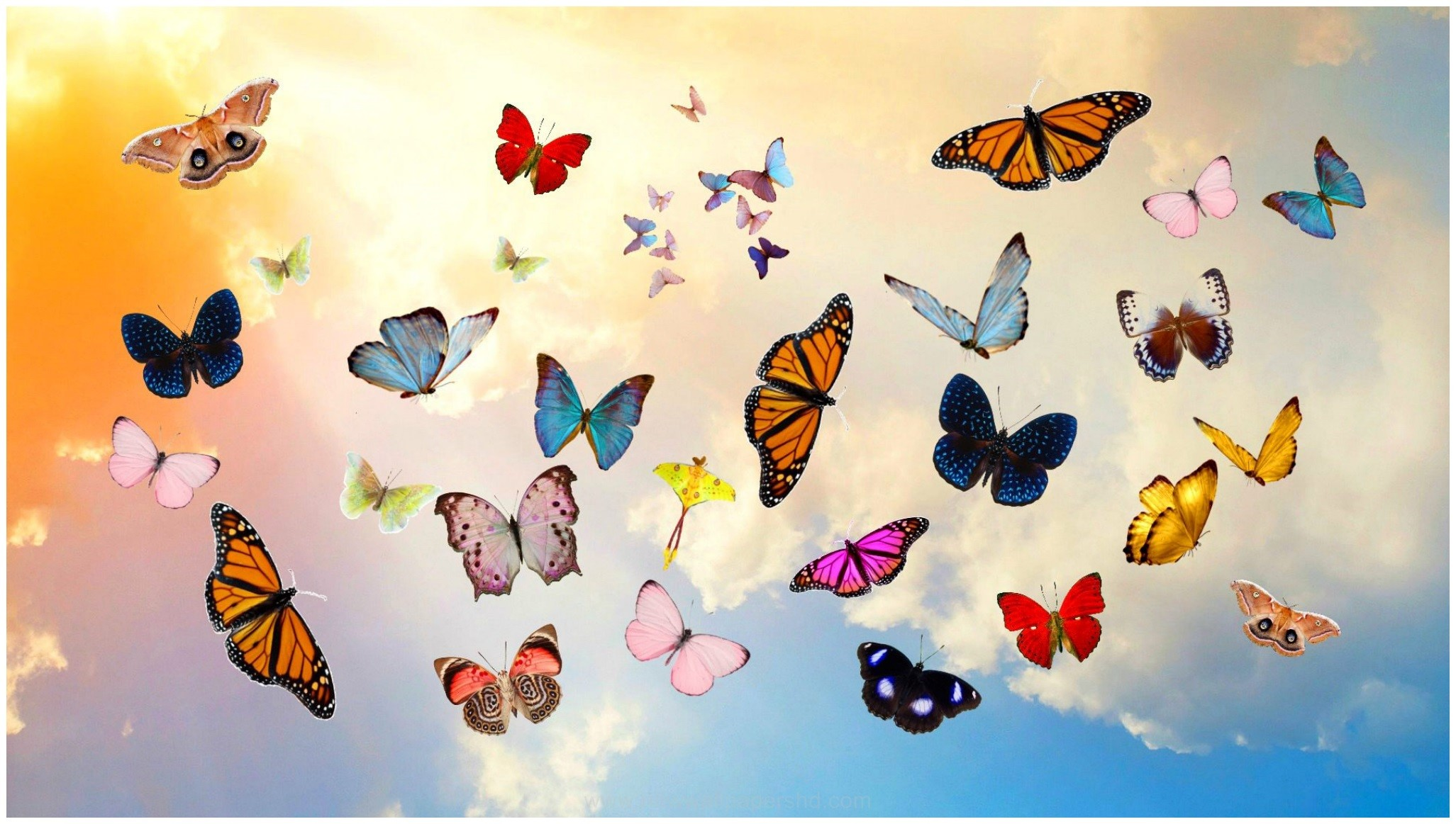 2053x1163 BEAUTIFUL BUTTERFLIES HD WALLPAPER
