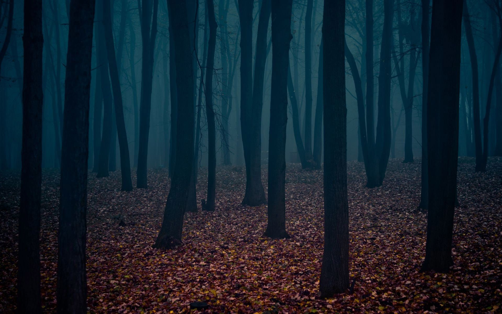 1920x1200 Dark Forest Wallpaper High Quality Resolution