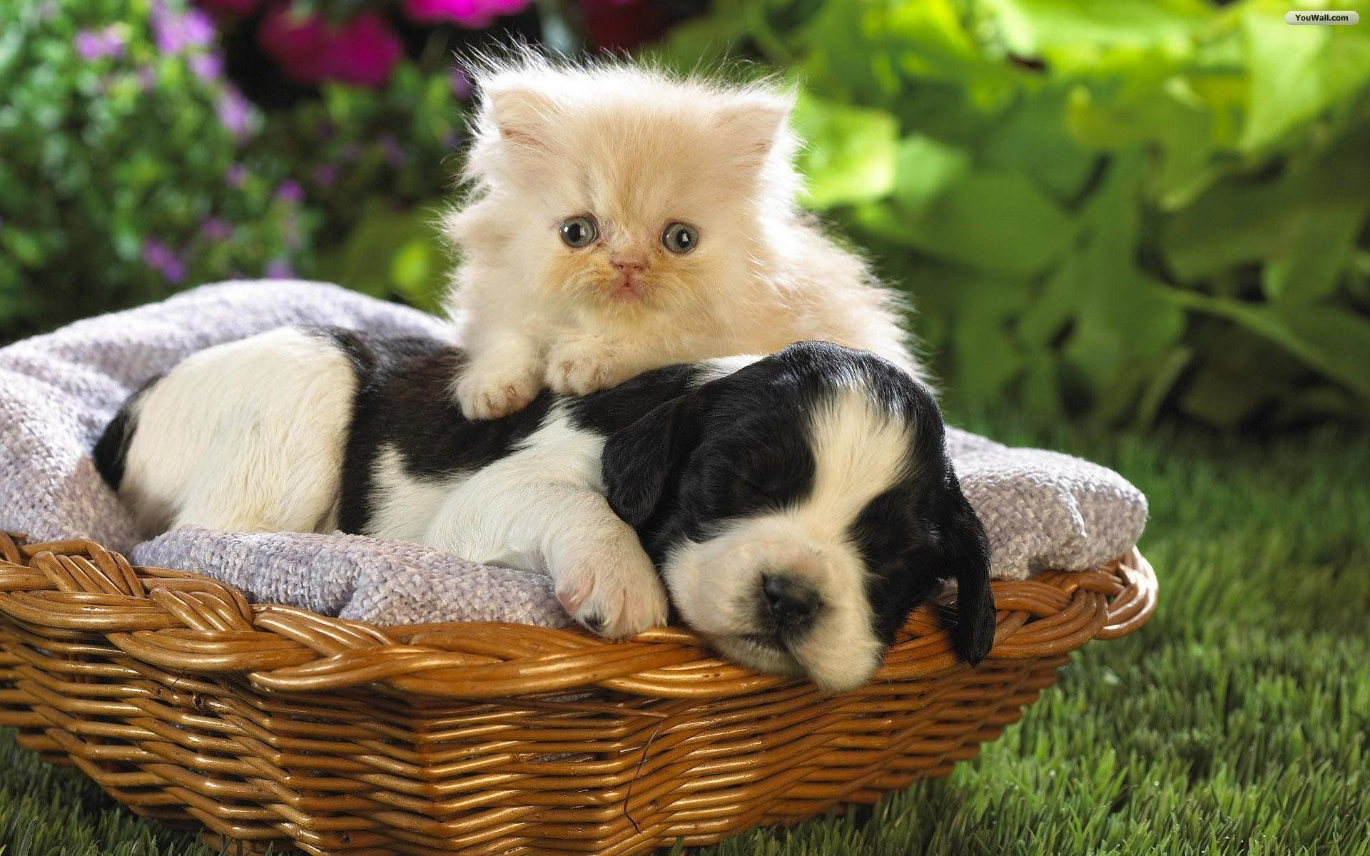 1920x1200 Cat And Dog Wallpaper 53 20741 High Definition Wallpapers .